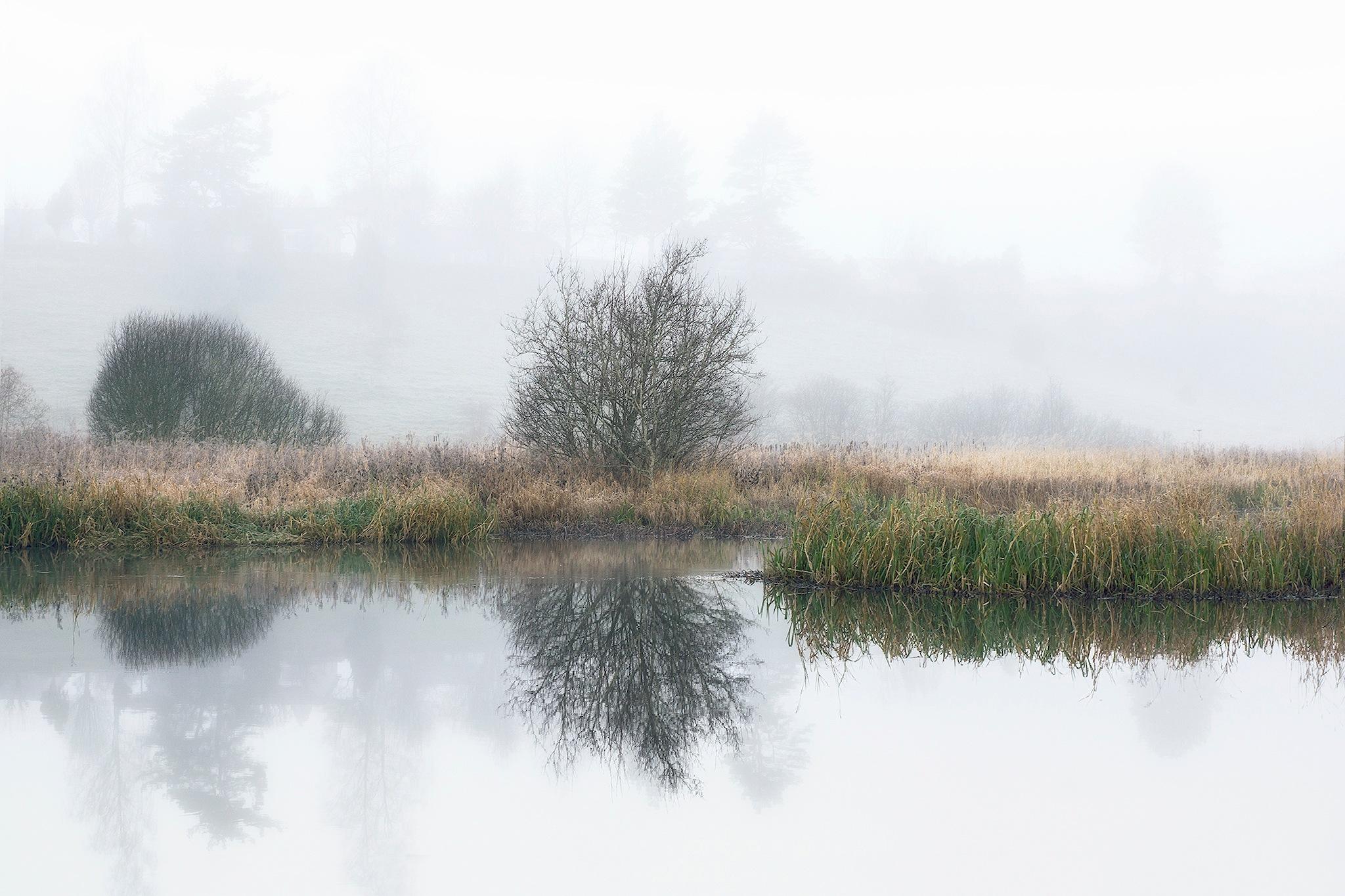 Silent grey morning by Lena Sanver