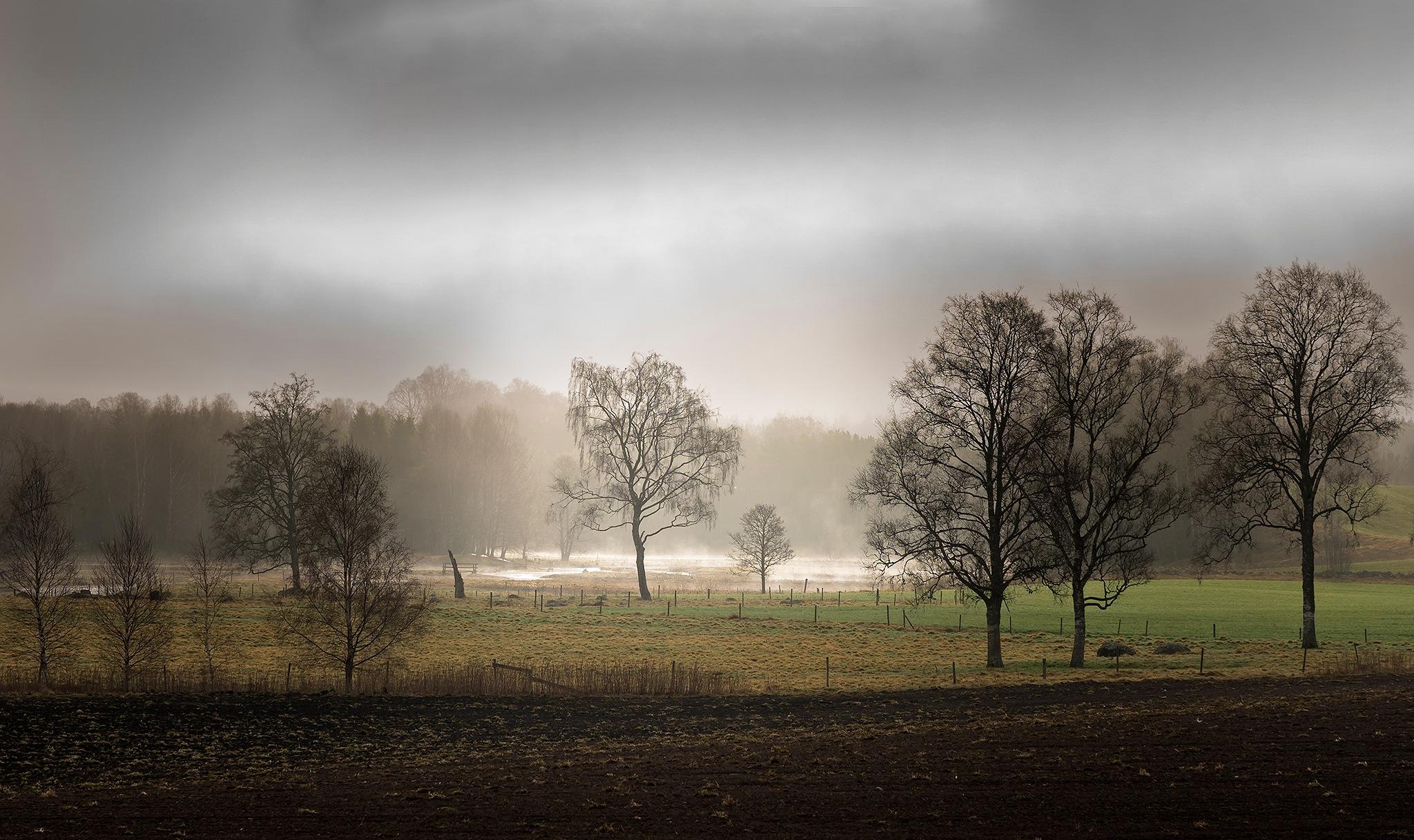 Morning light by Lena Sanver