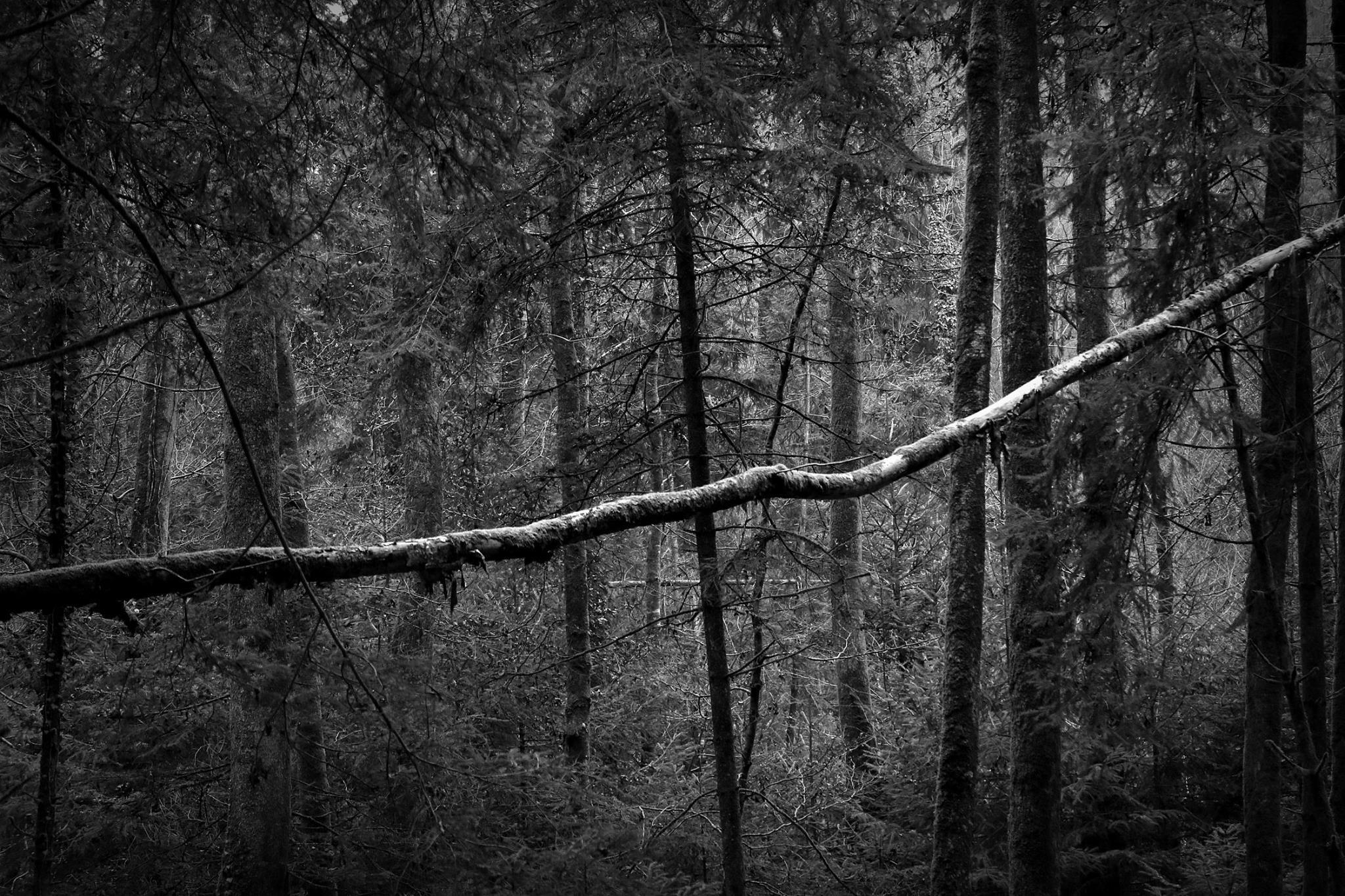 Untitled by Michel Villard