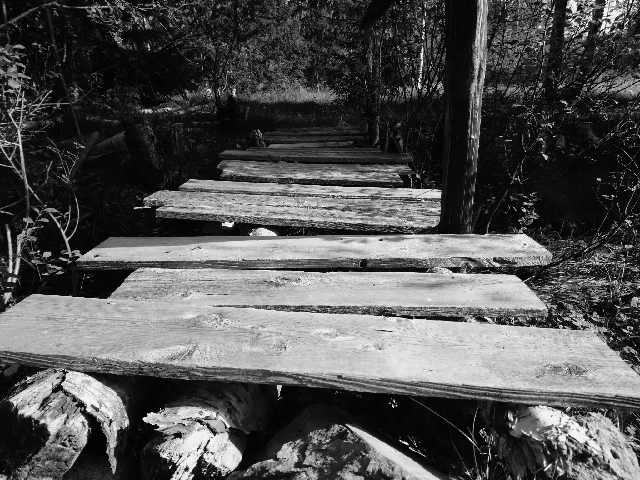wooden overpass by Simen Askedal