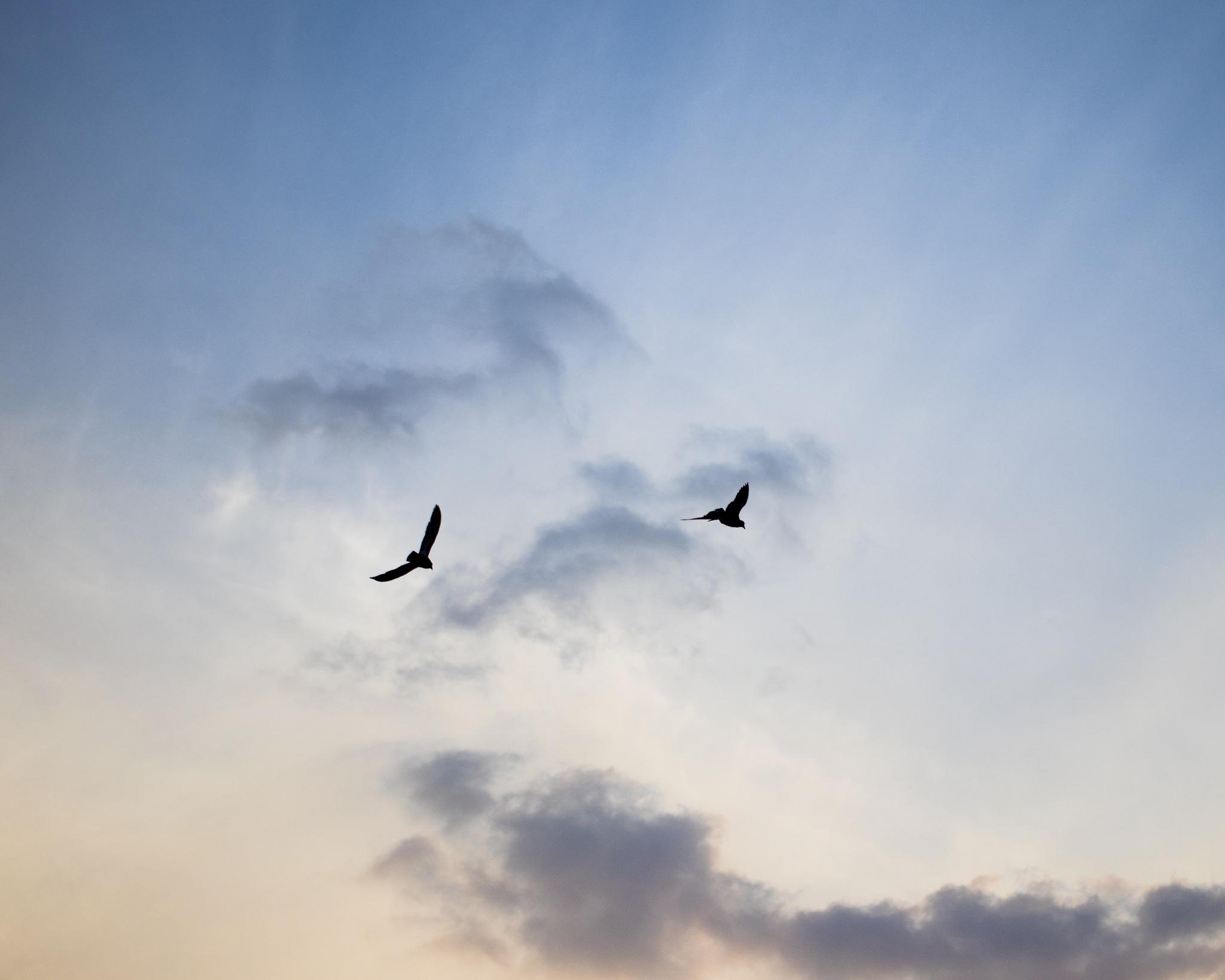 sky high by Lim Jing Yuan