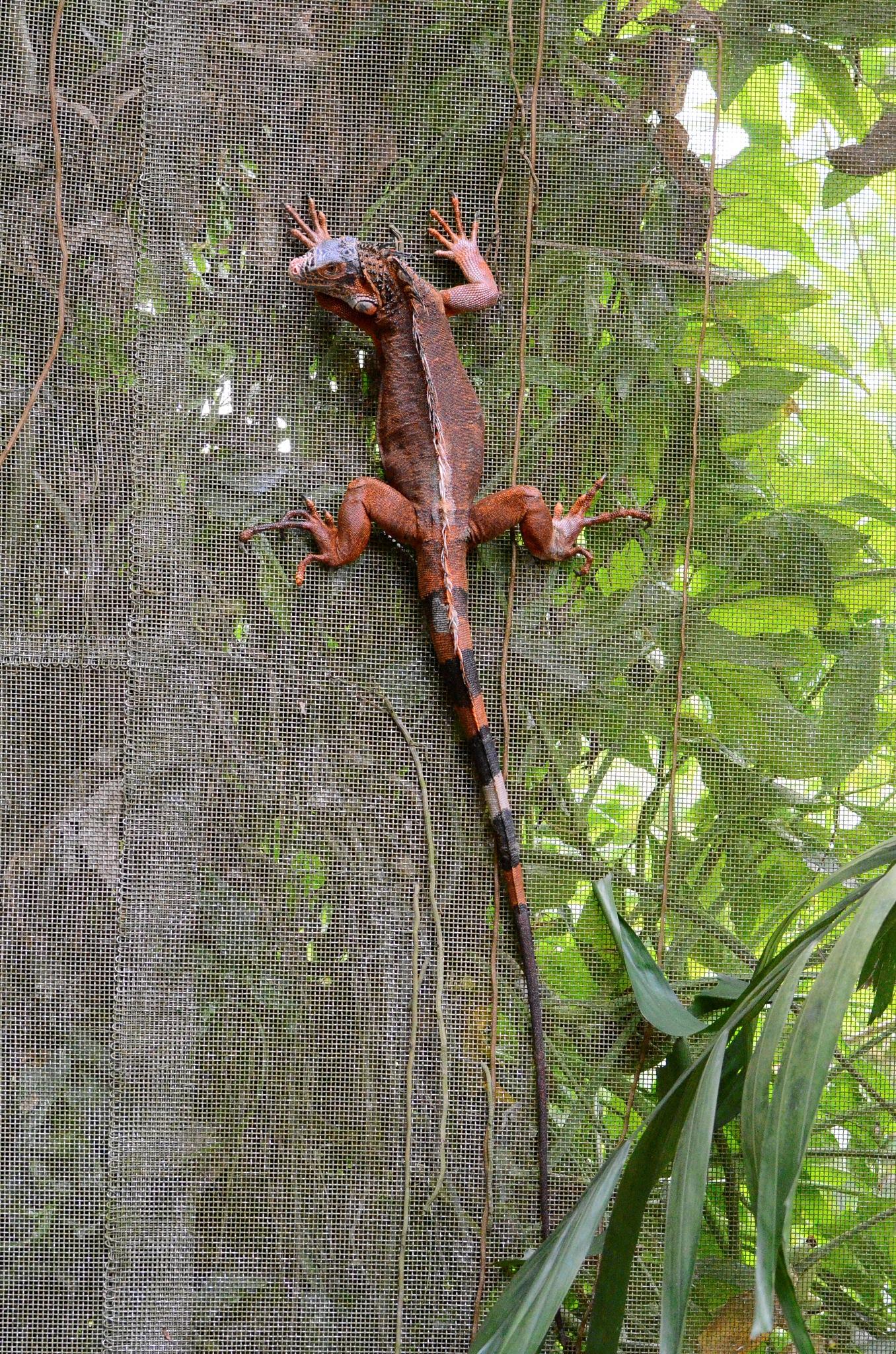 reptile by Ashok n Pulliyerengi