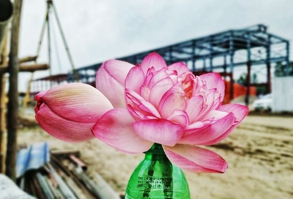 Lilly, lotus  by Rafi islam