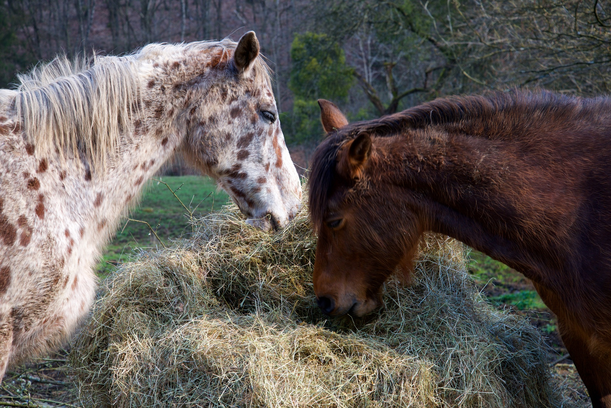 Horses by Wim