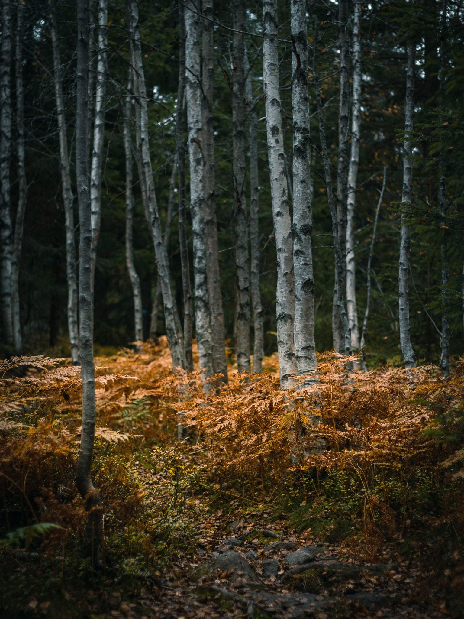 Forest at autumn by Kine Rosnes