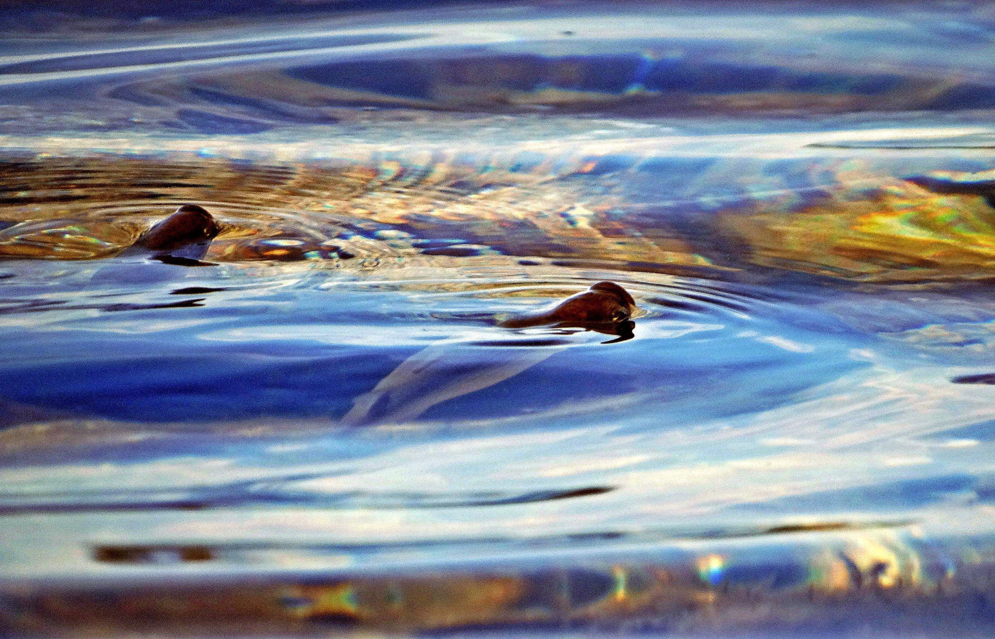 Untitled by Nika Brili