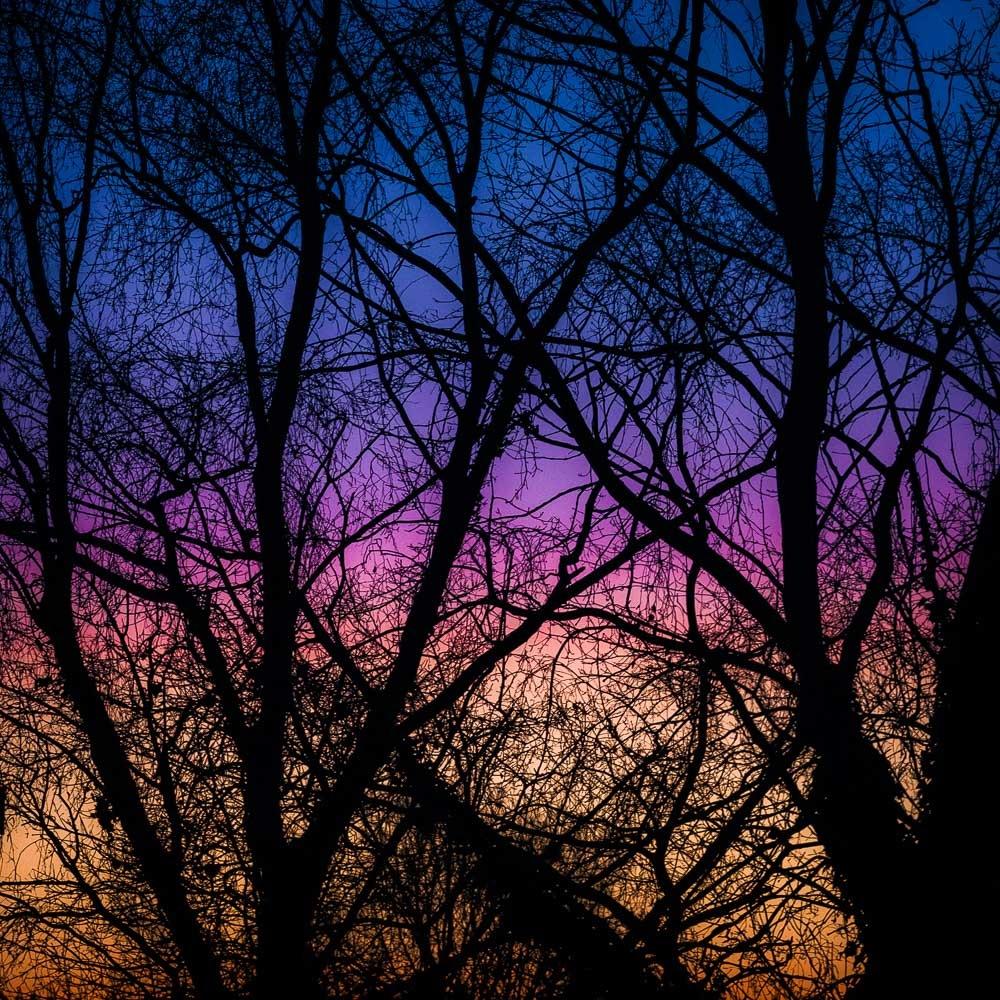 Photo in Random #aurore #arbre #couleurs