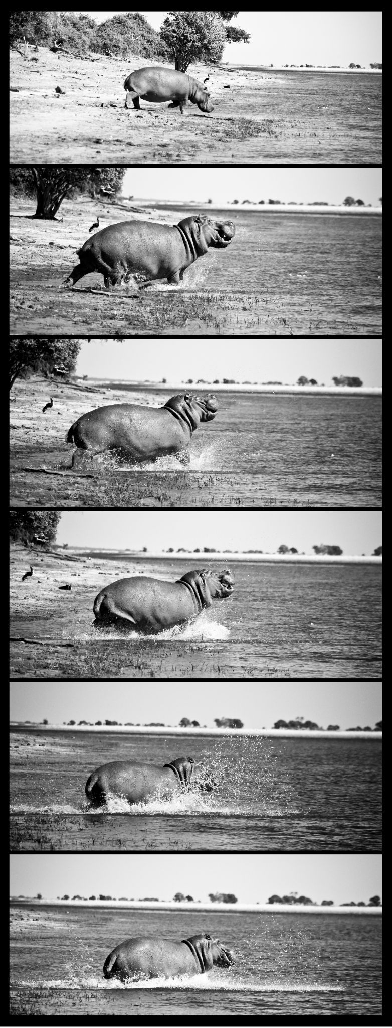 Hippo 2 by Andrew Howes