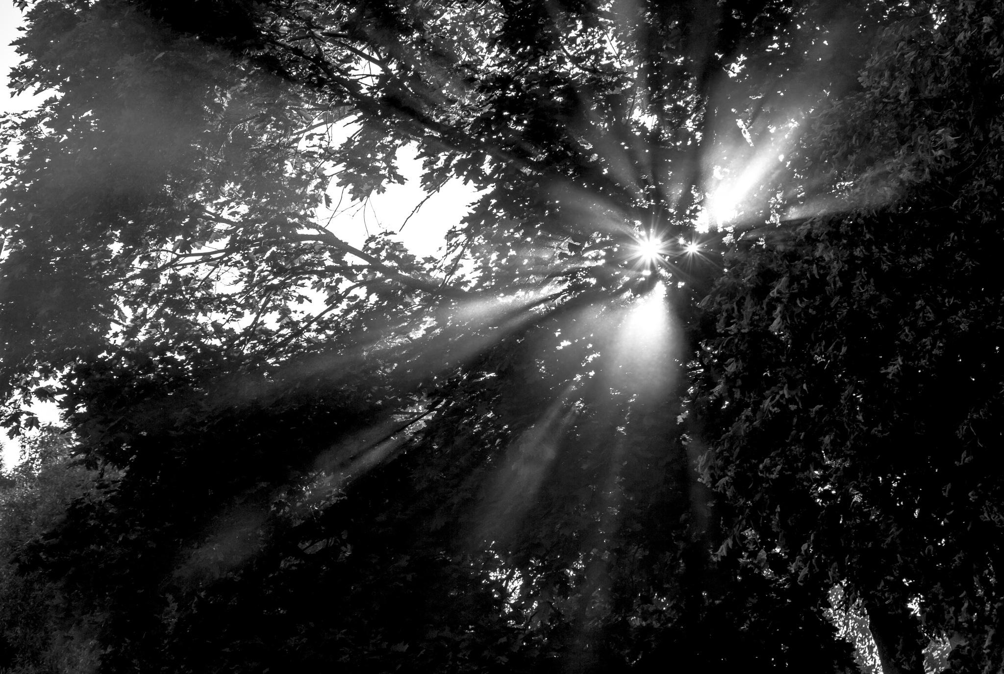 Rays by Saulius Mikalauskas