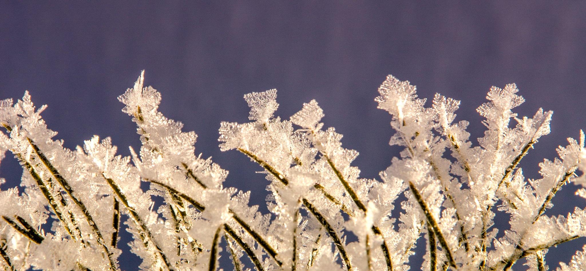 Photo in Macro #hoarfrost #winter #pne