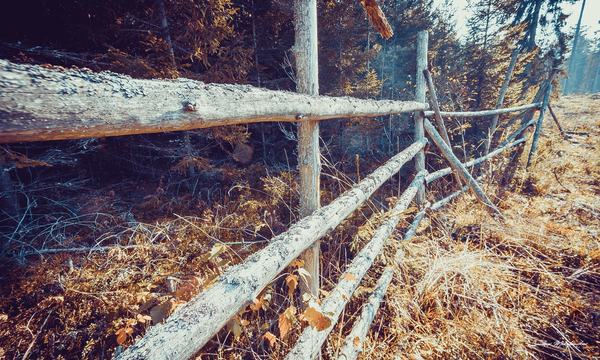 Fence by Saulius Mikalauskas