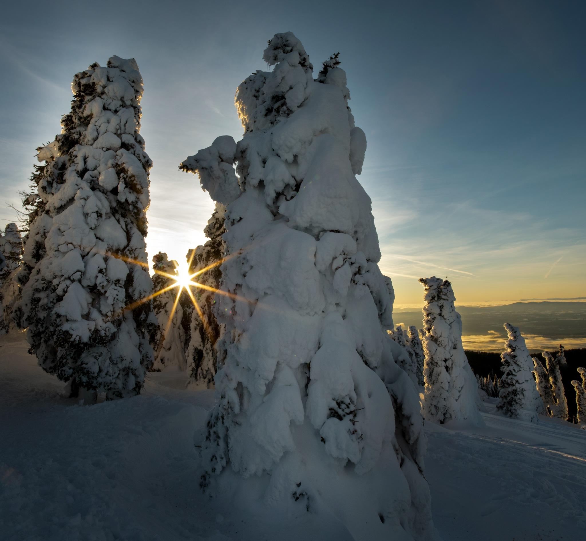Frozen Trees on Mt Spo by Hayden Hohman
