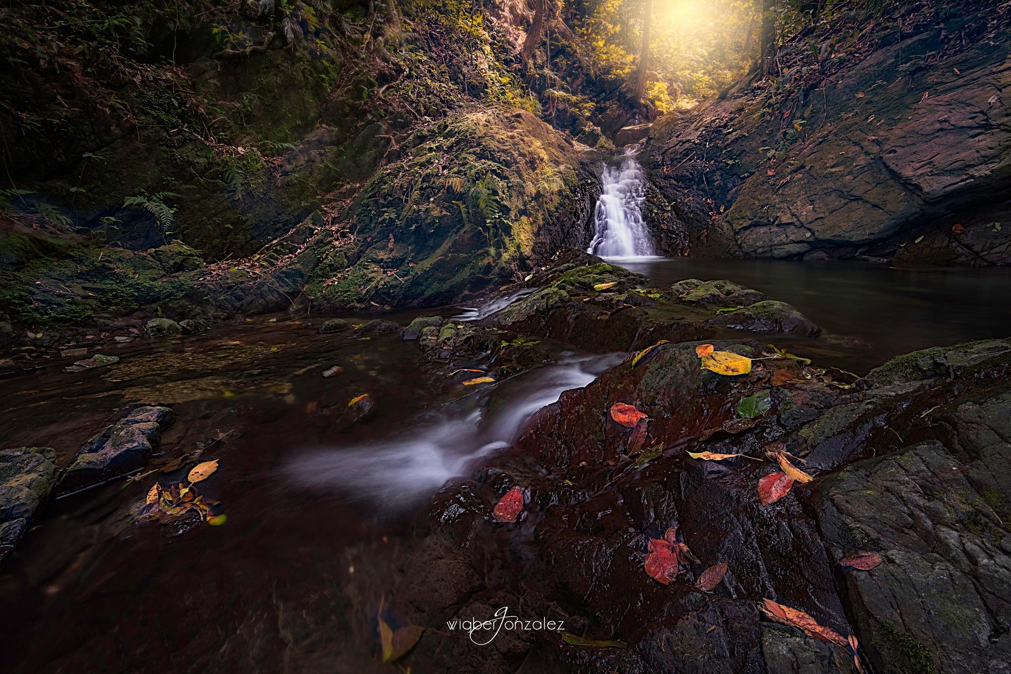 Autumna by Wigber Gonzalez