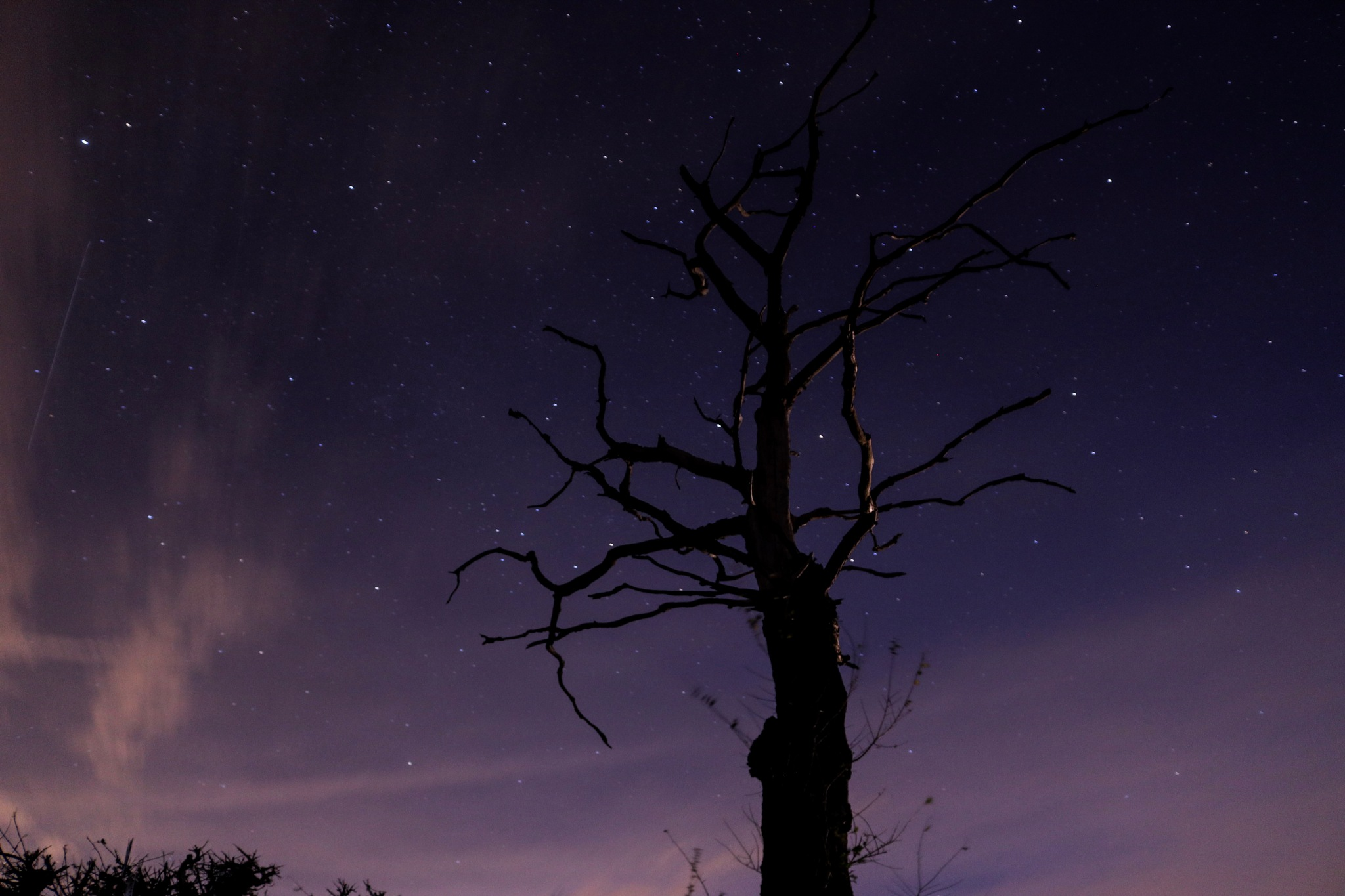 Starry Nights and Purple Skies by Poppy Cornell