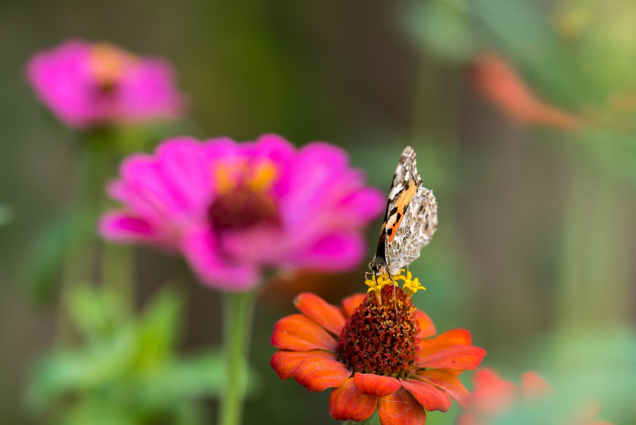 Schmetterling by Ali Abrar