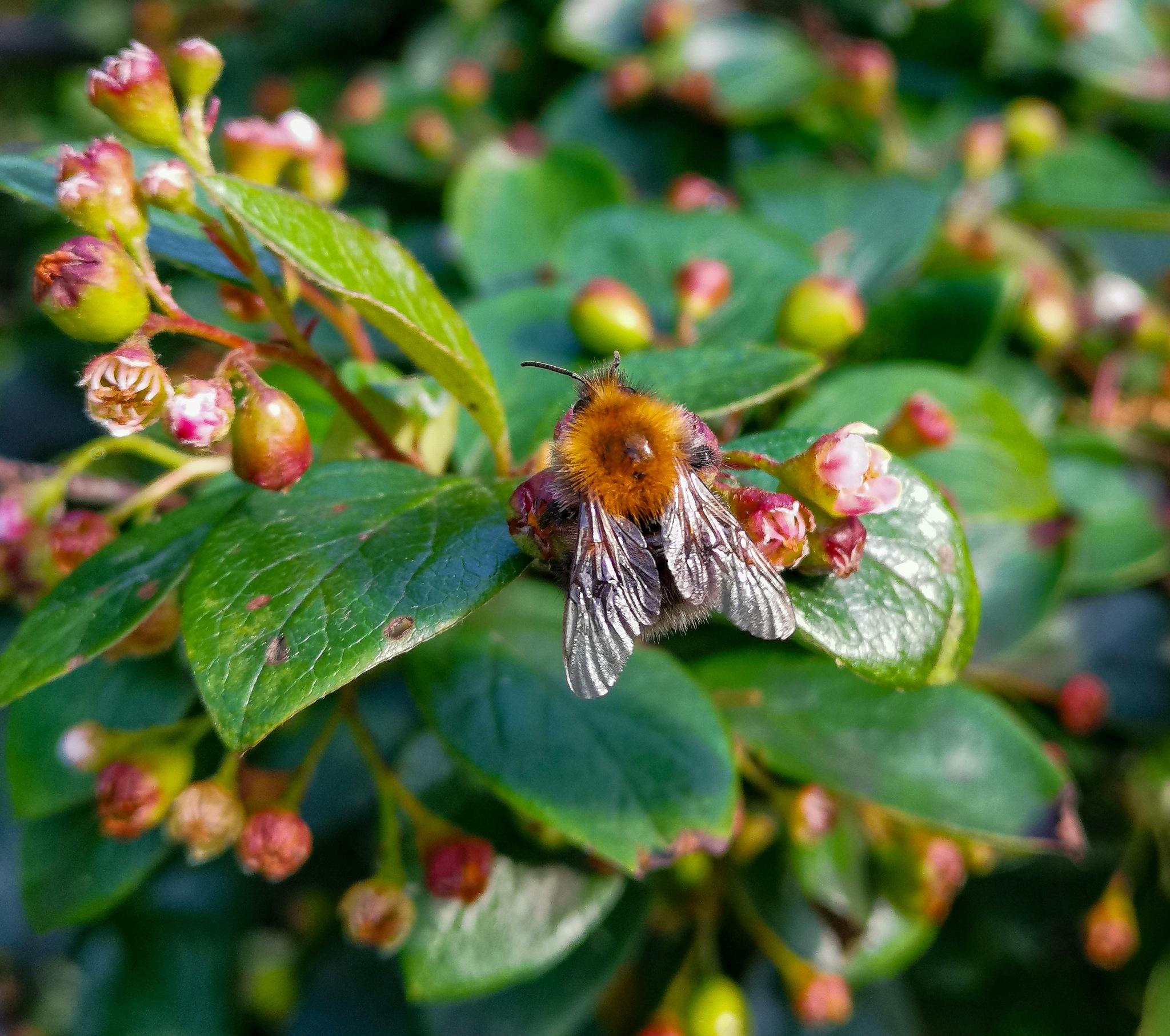 Plant fly by JonArneFoss