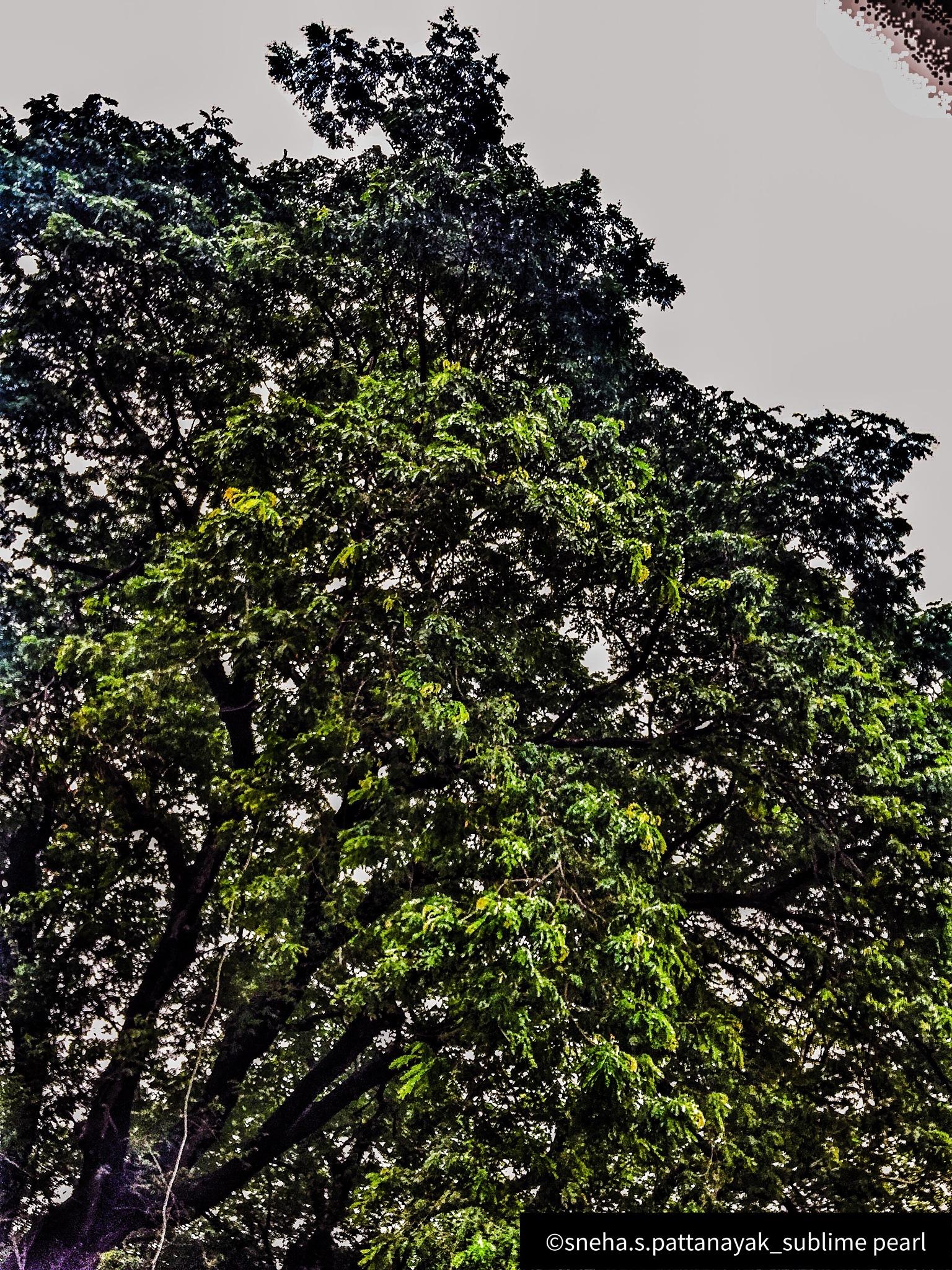 Untitled by Sneha Pattanayak