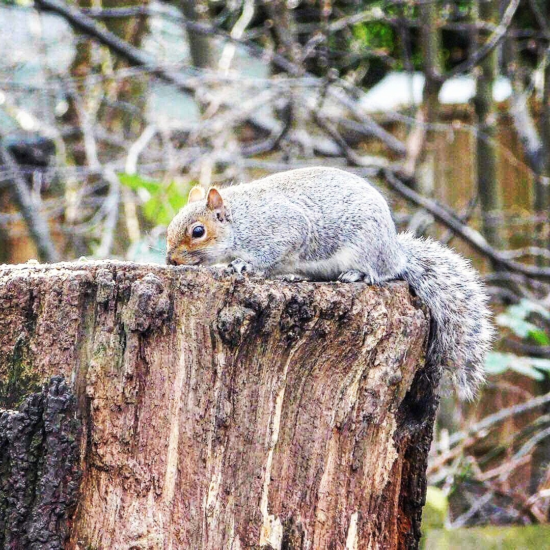 Photo in Animal #nature #eating #goodshot #tree #winter #animal #wild