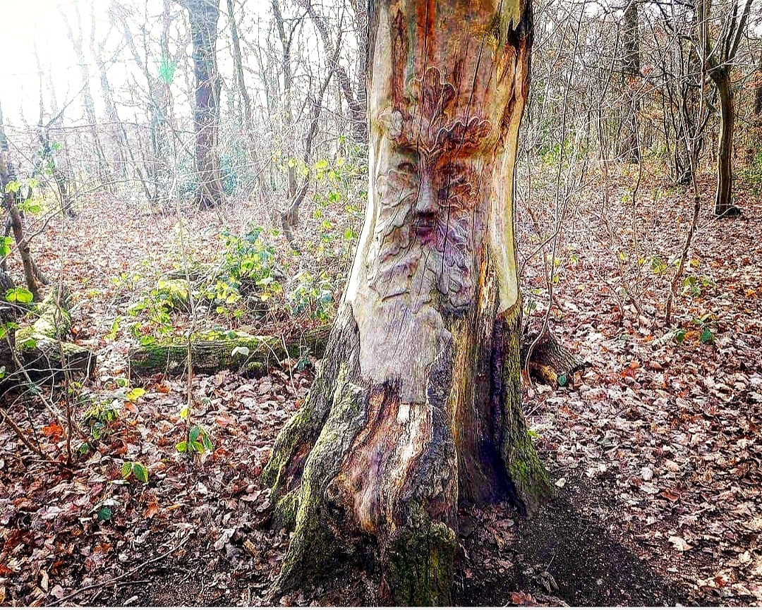 Photo in Nature #tree #woods #woodland #forest #art #nature #natural