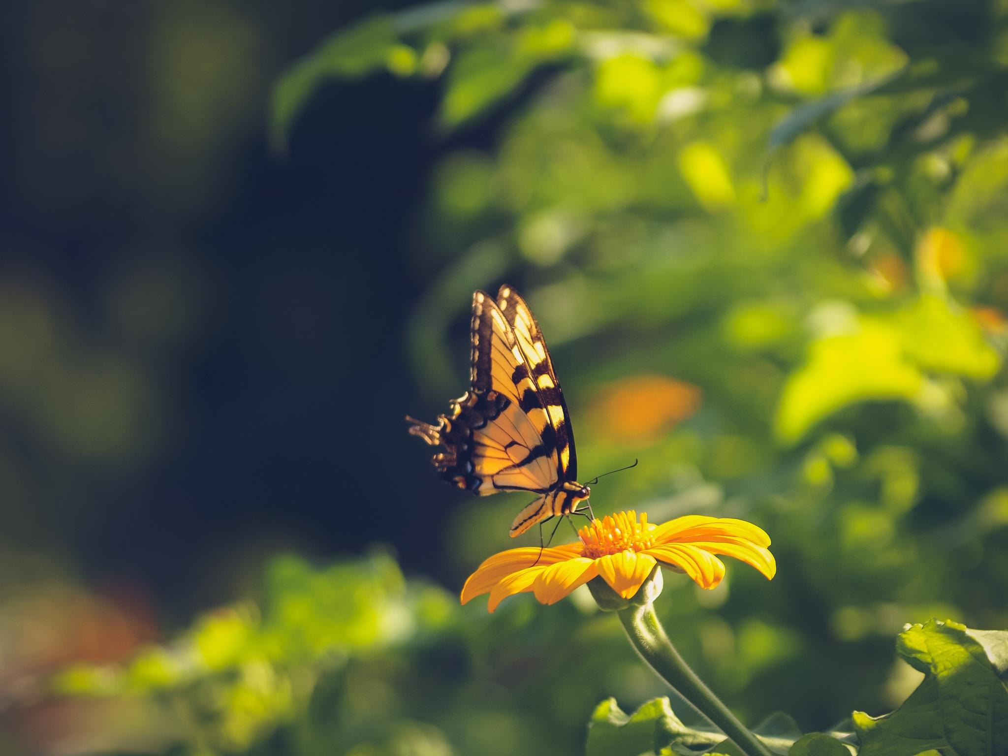 Brightest Sunshine by Garden Windows Photography