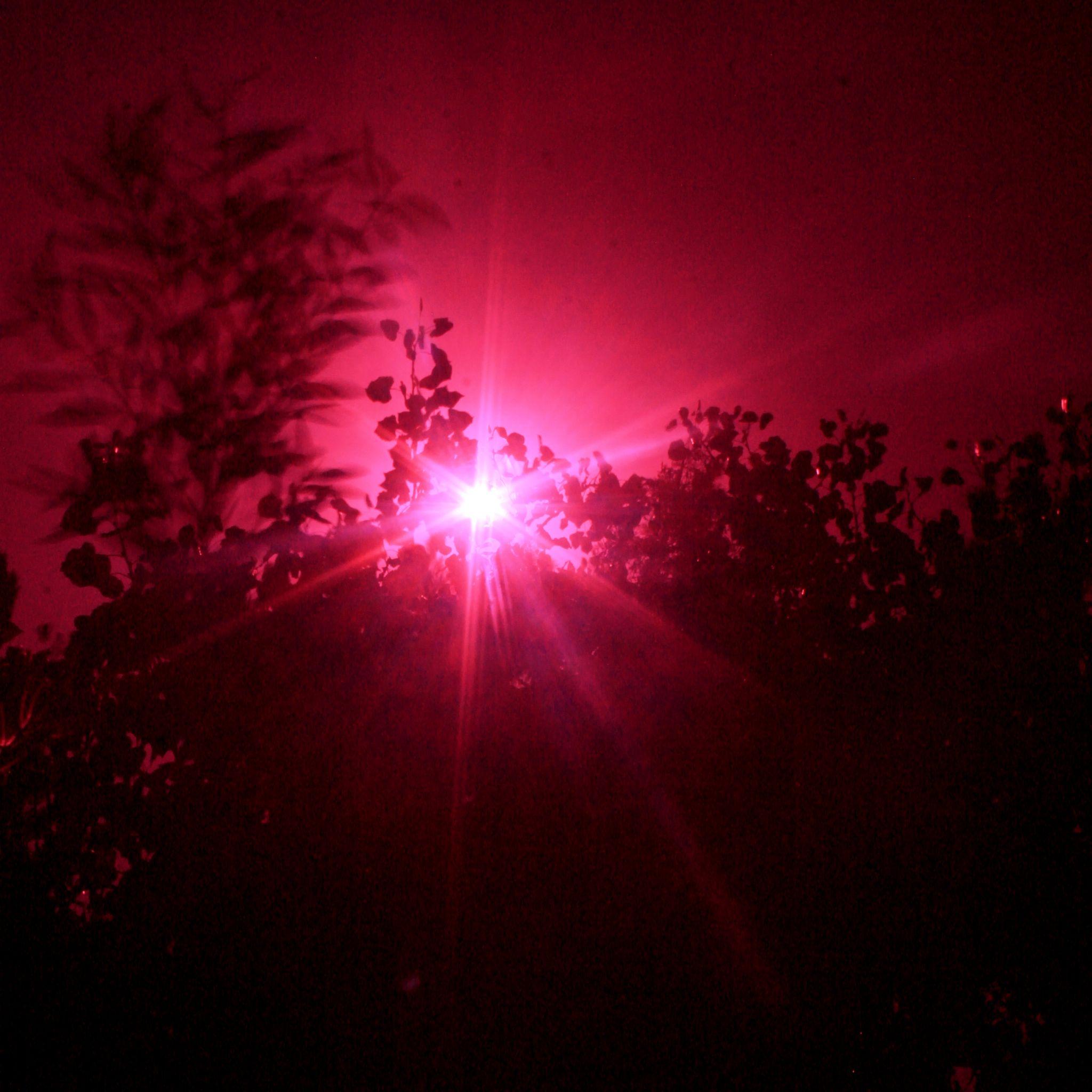 sunburst by wiley walker