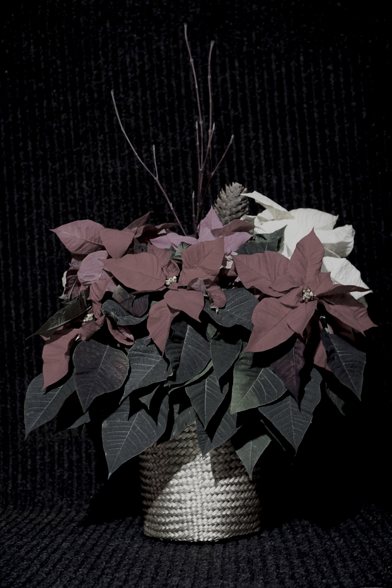 Christmas flowers by Loki17