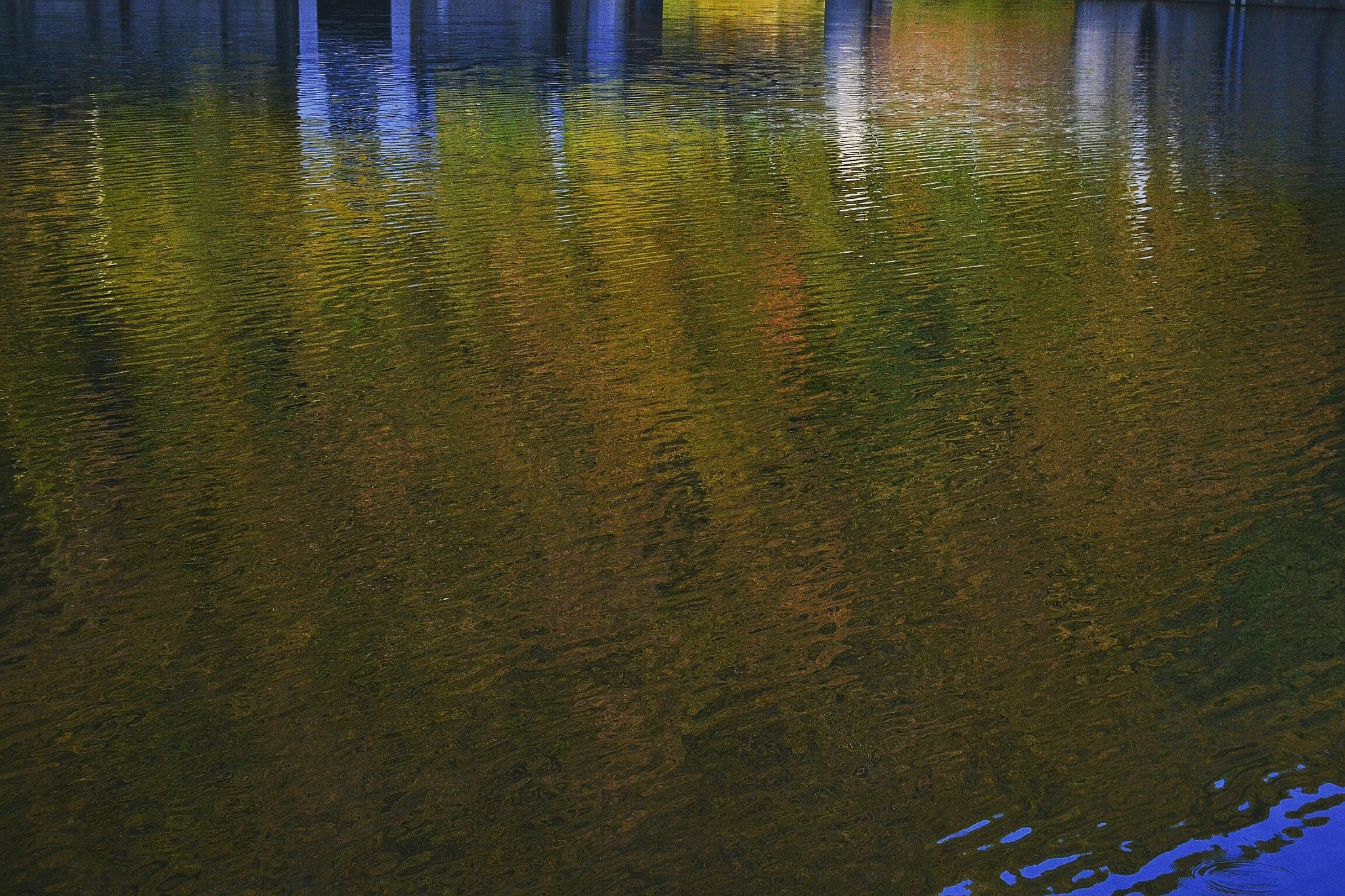 ..autumn colors! by valerio