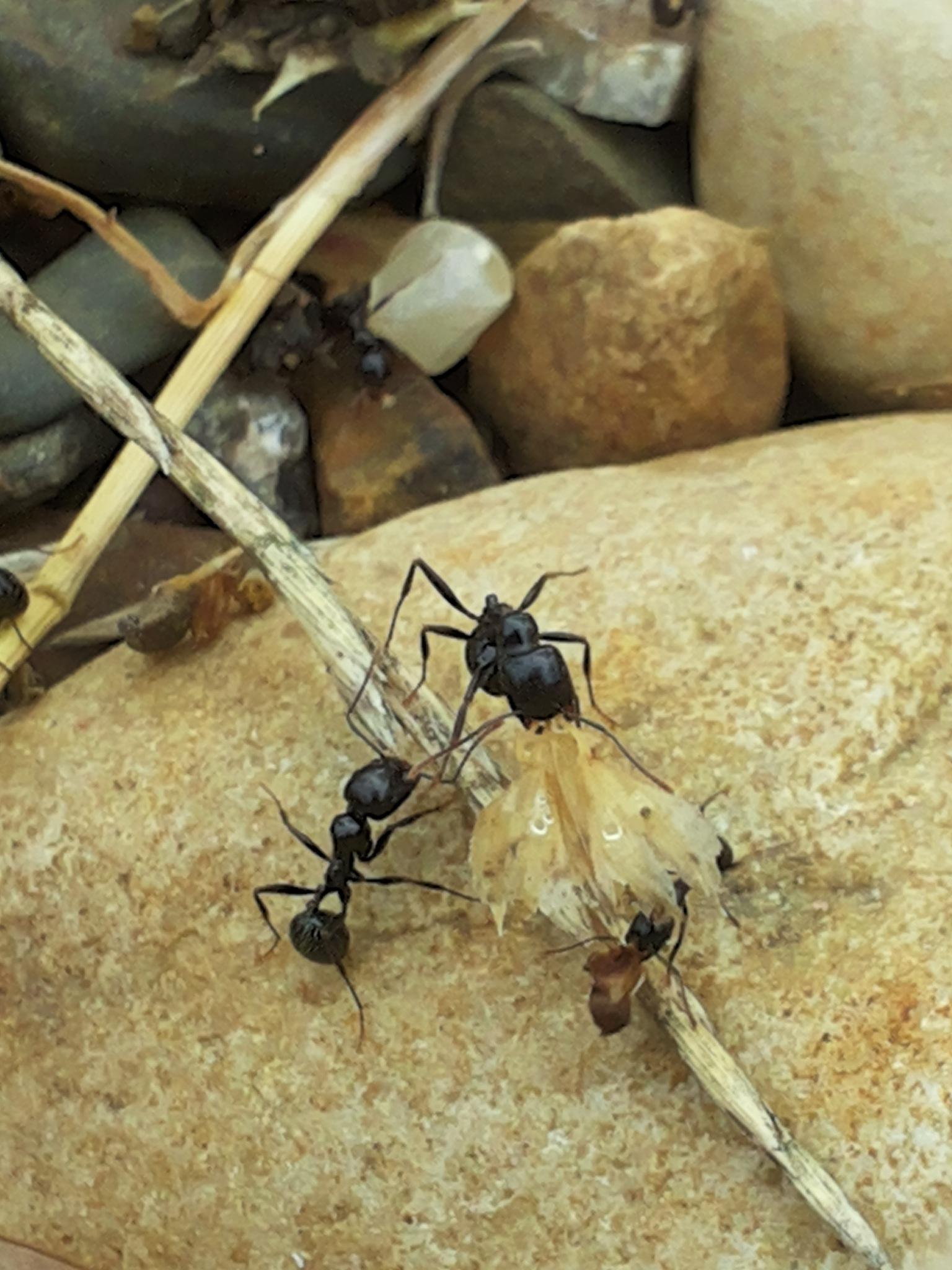 hard working  ants  by Zakaria Daoudi