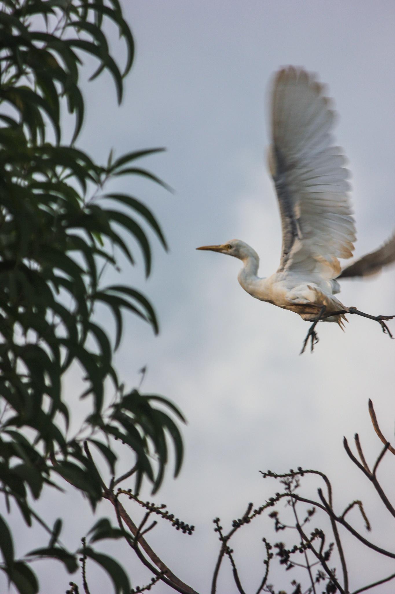 Bird watching by Randy Roberts