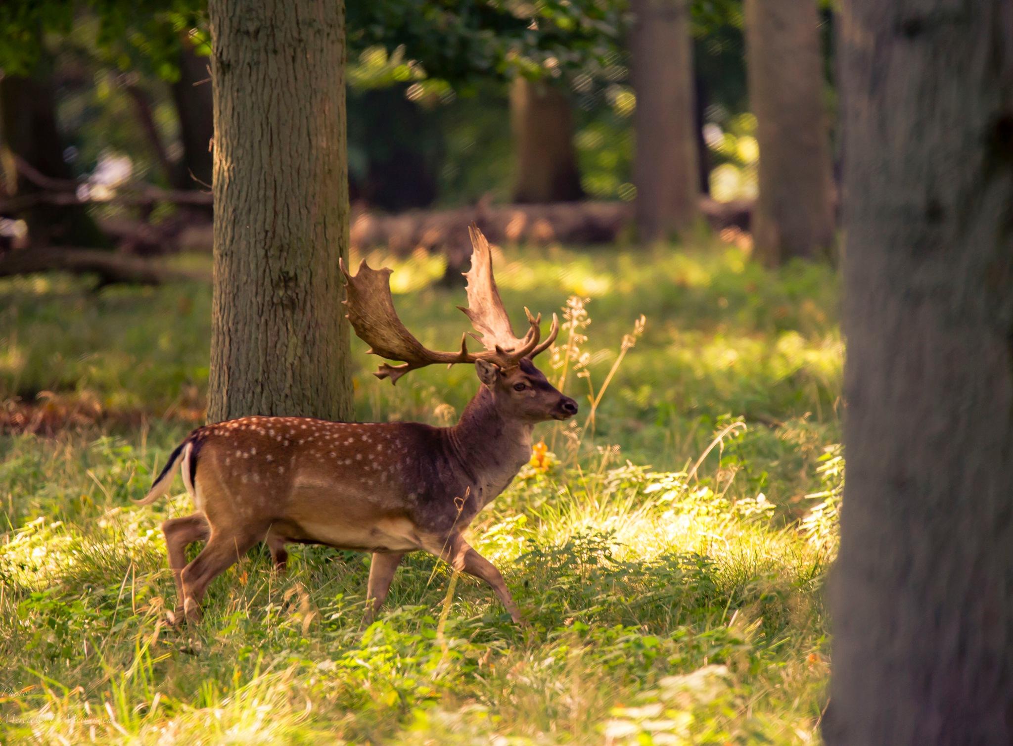 Deer in magic lights... by Merete Mellingen