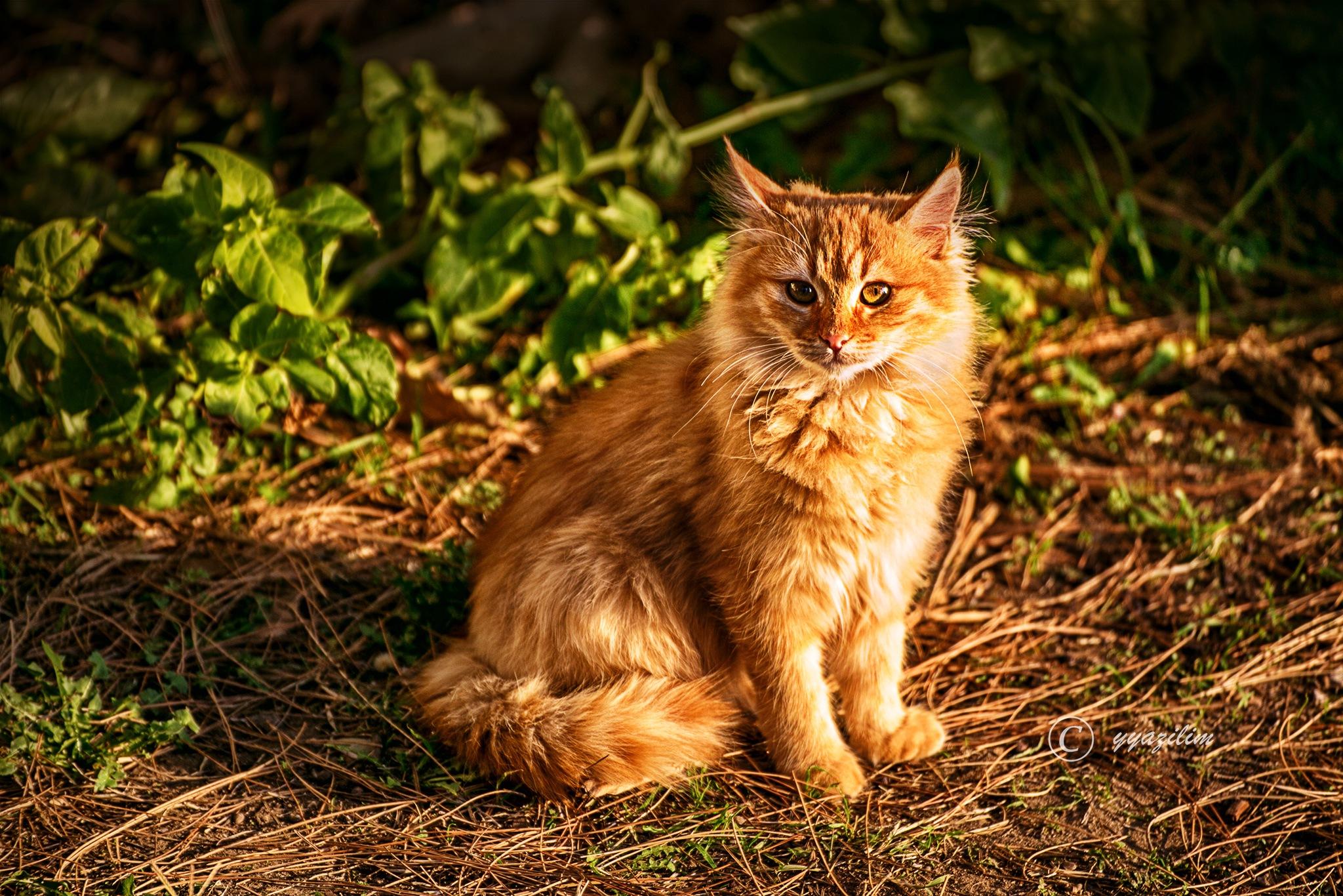 Kedi güzeli by İbrahim YILDIZ