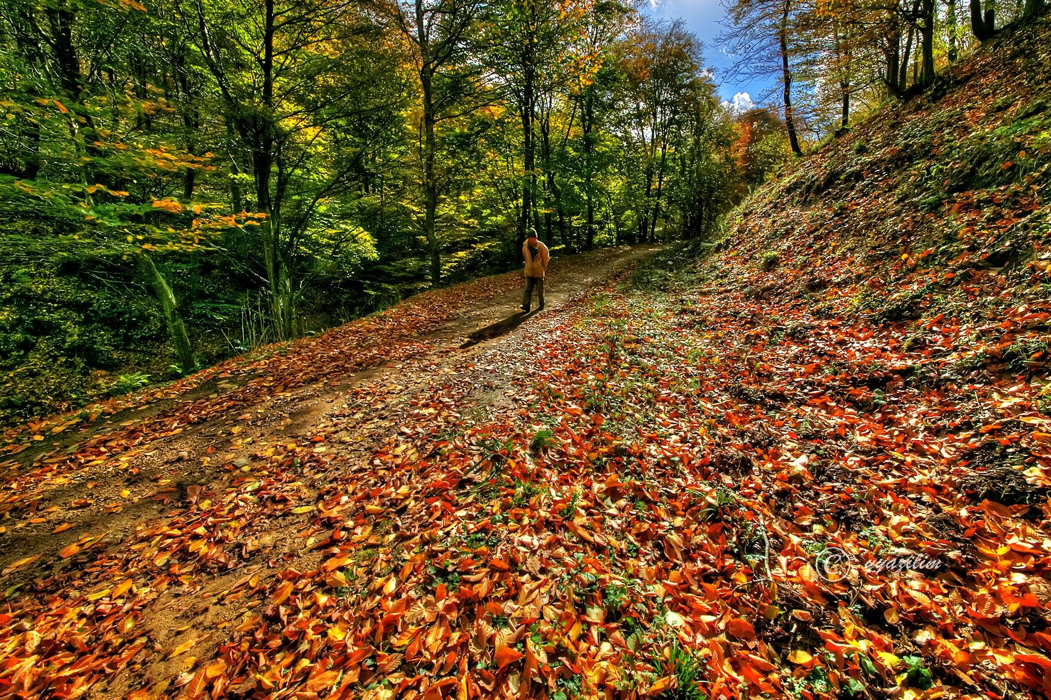 Ormanda tek başına by İbrahim YILDIZ