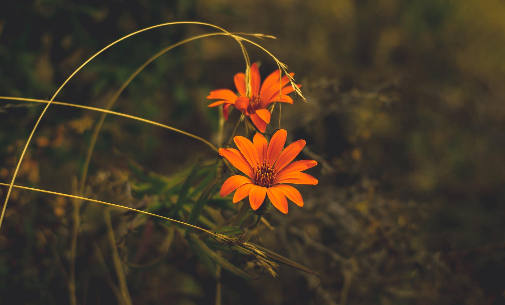 Flower. by Fernando Cesari