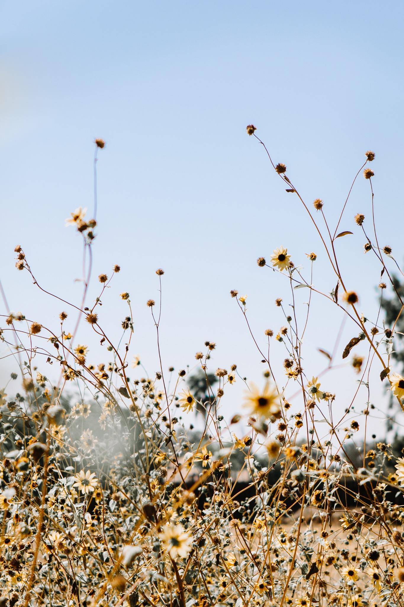 Field by Adrienne Leonard