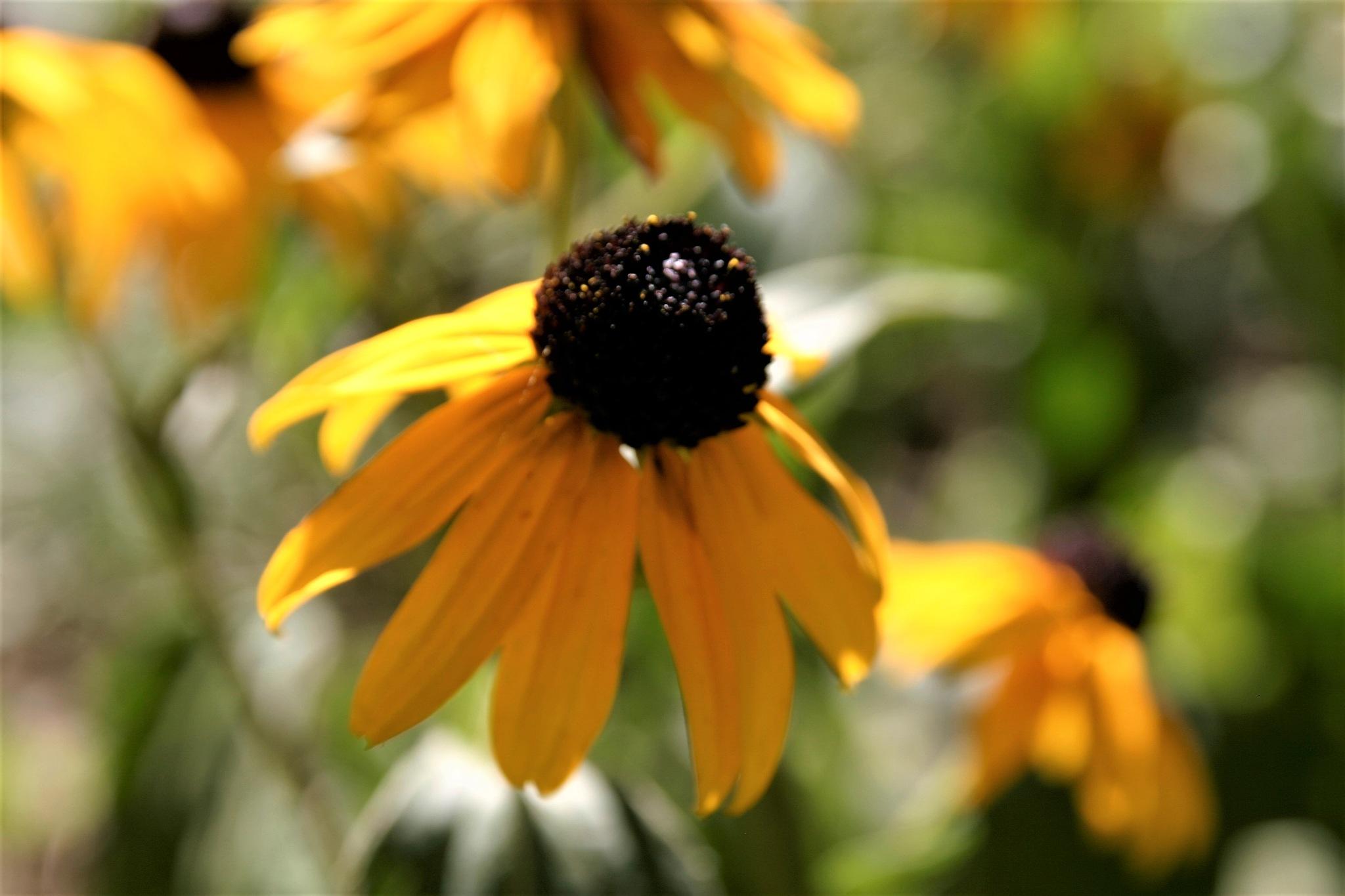 flower by Kerstin M