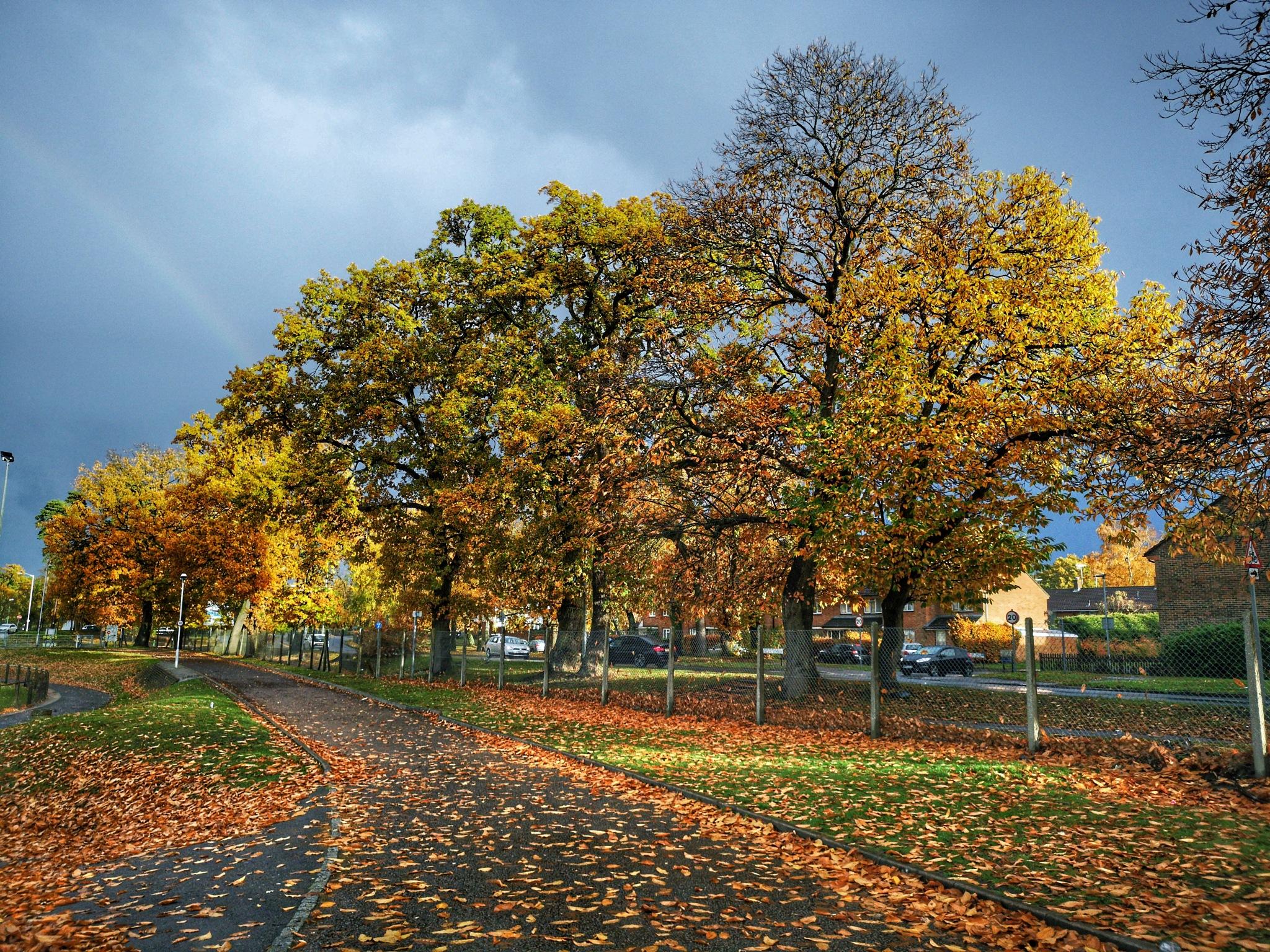 Walk in the rain 4 by Thomas White Photos