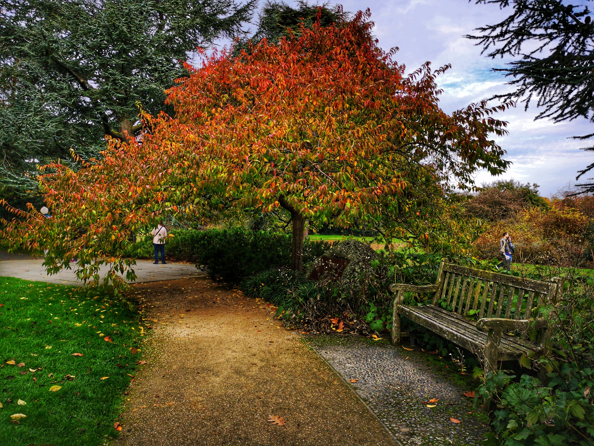 A bench and a beautiful tree in Kew Gardens  by Thomas White Photos