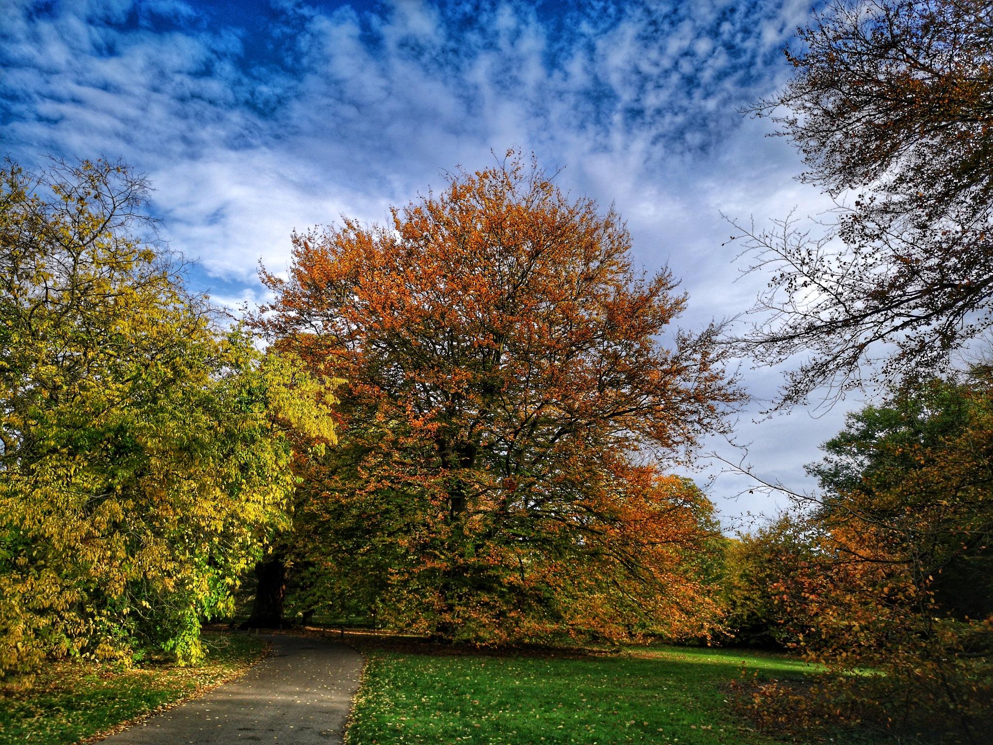 Walk in Kew Gardens 20 by Thomas White Photos