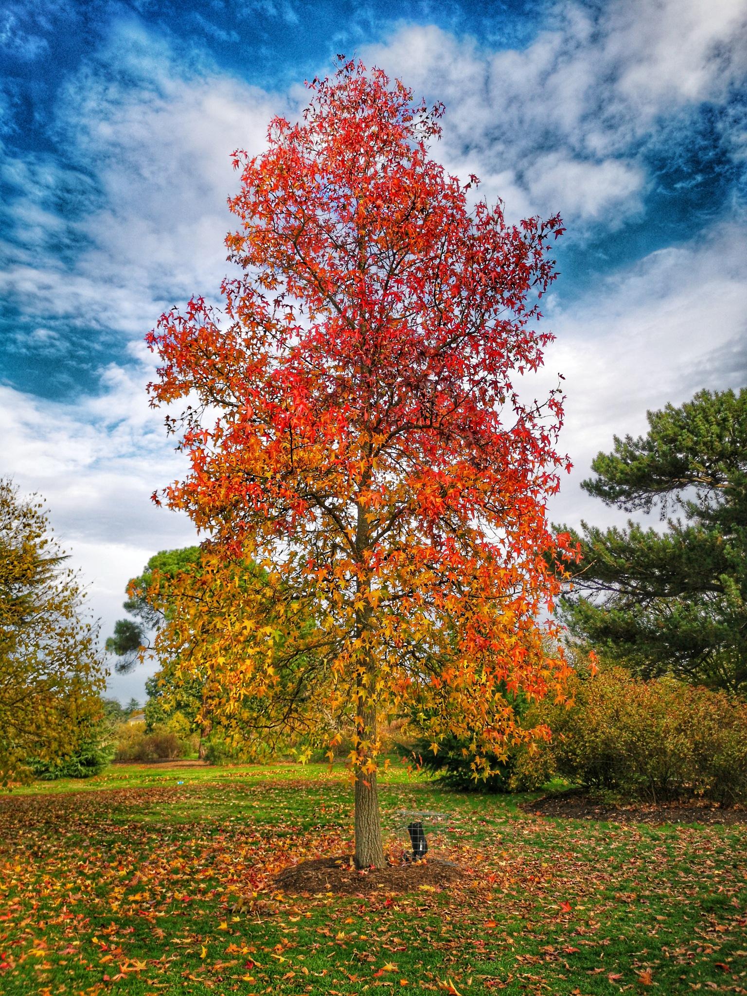 Walk in Kew Gardens 23 by Thomas White Photos