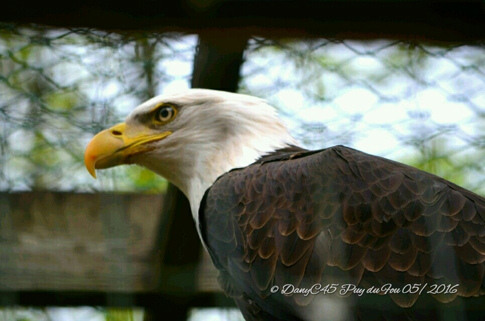 Animal by DanyC45