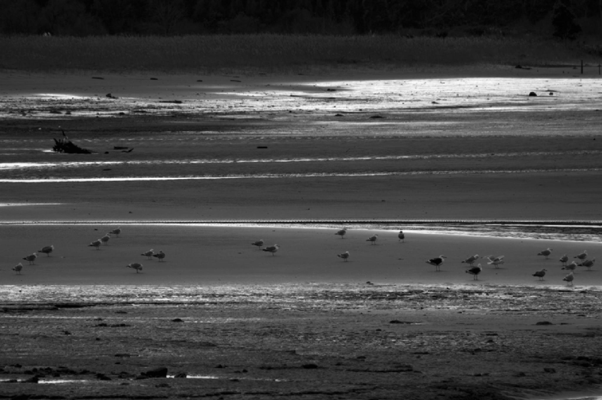 Photo in Black and White #art #creativity #photo #photography #nature #bernardoguerra