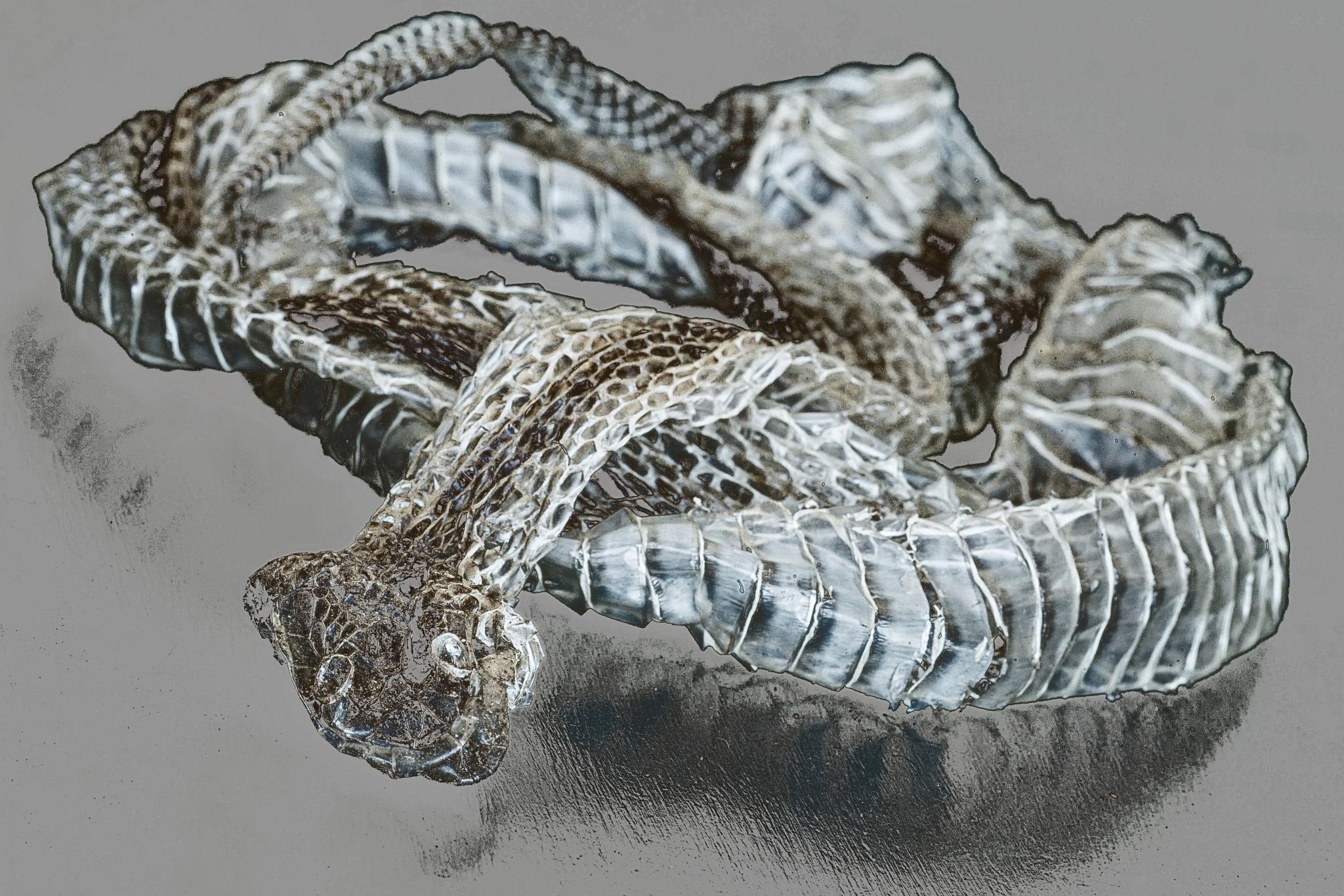 Snakeskin by Alun Wyld