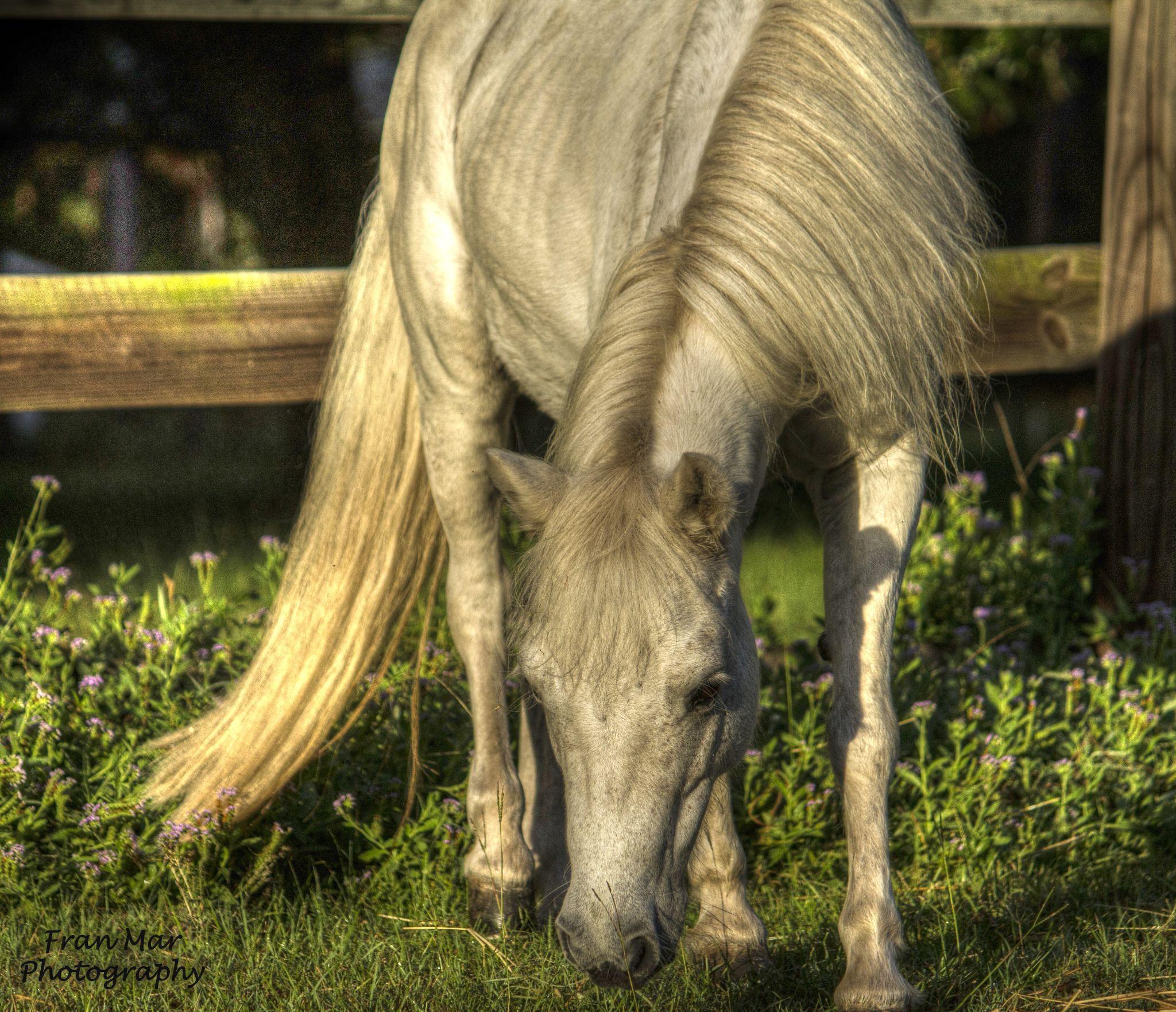 Little pony by Meg Francoeur
