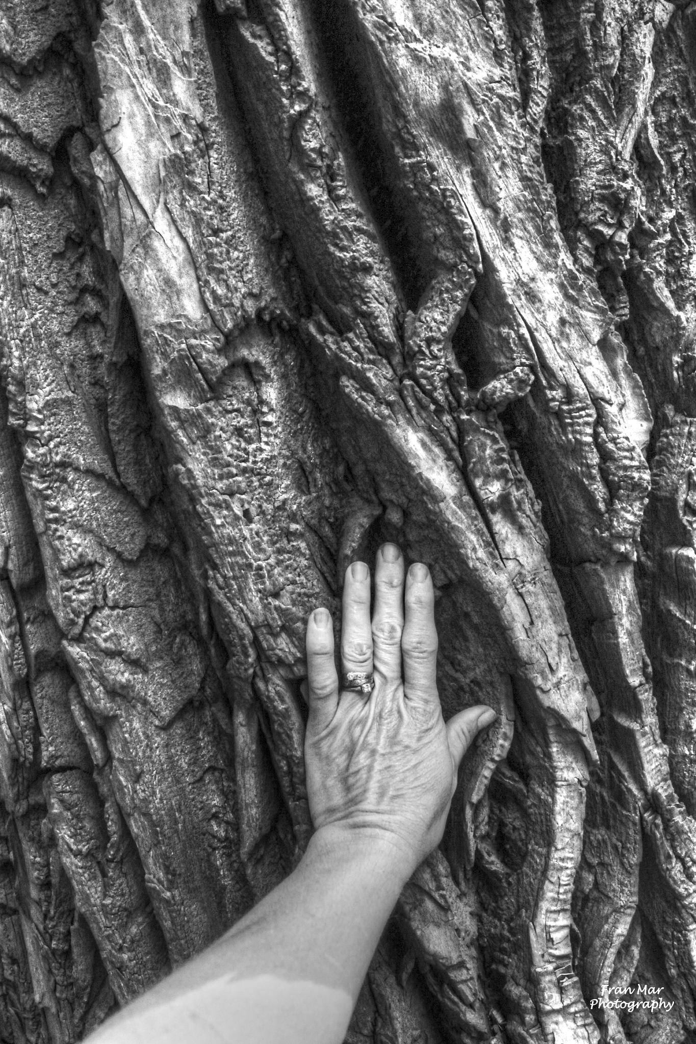 Tree's energy by Meg Francoeur