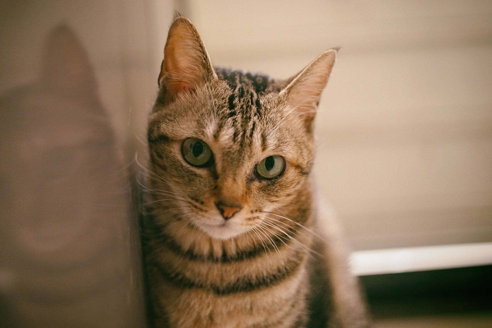 CAT by Yuan photography