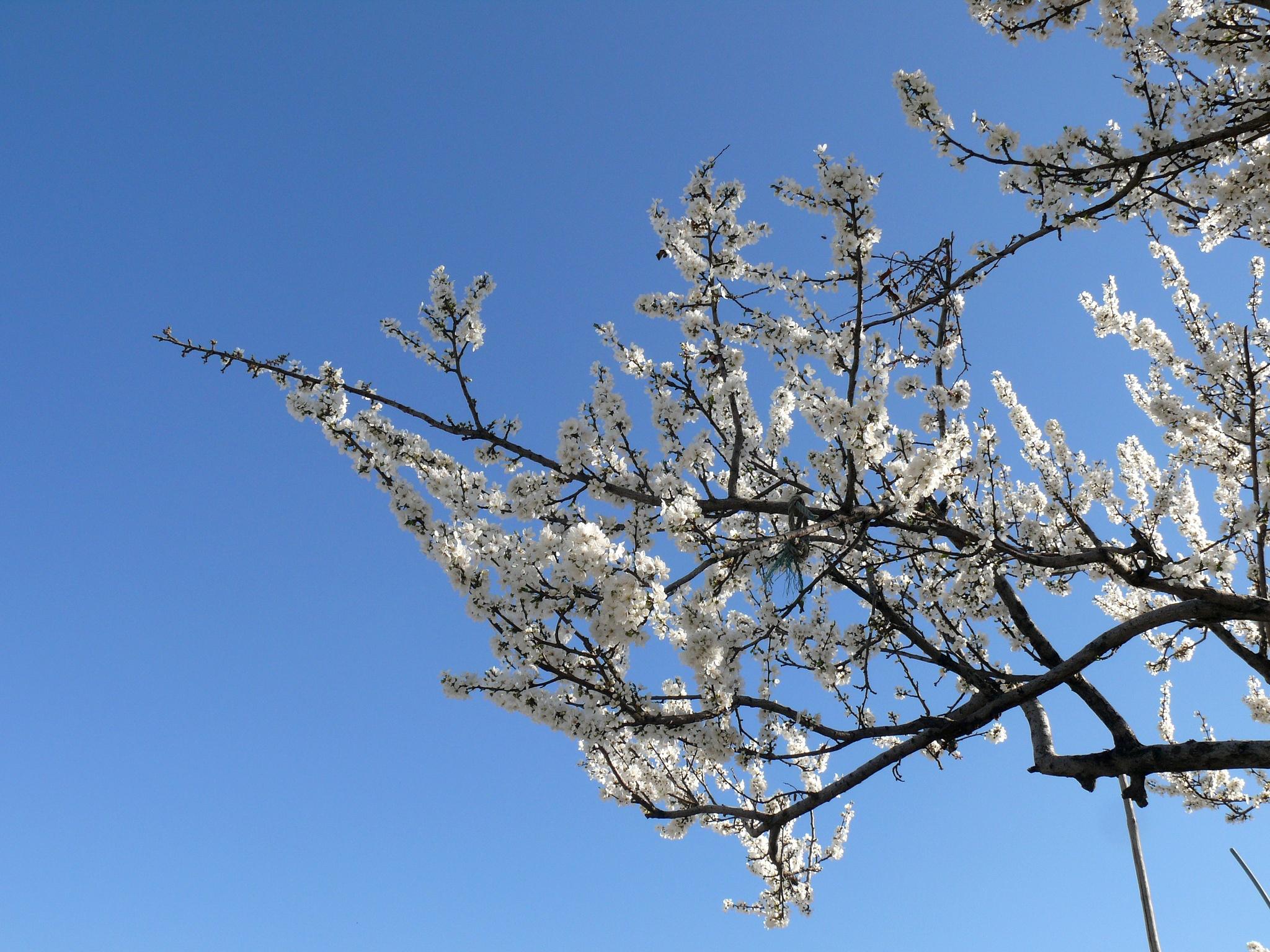 بهاران خجسته باد! by Aahmad Hezavei