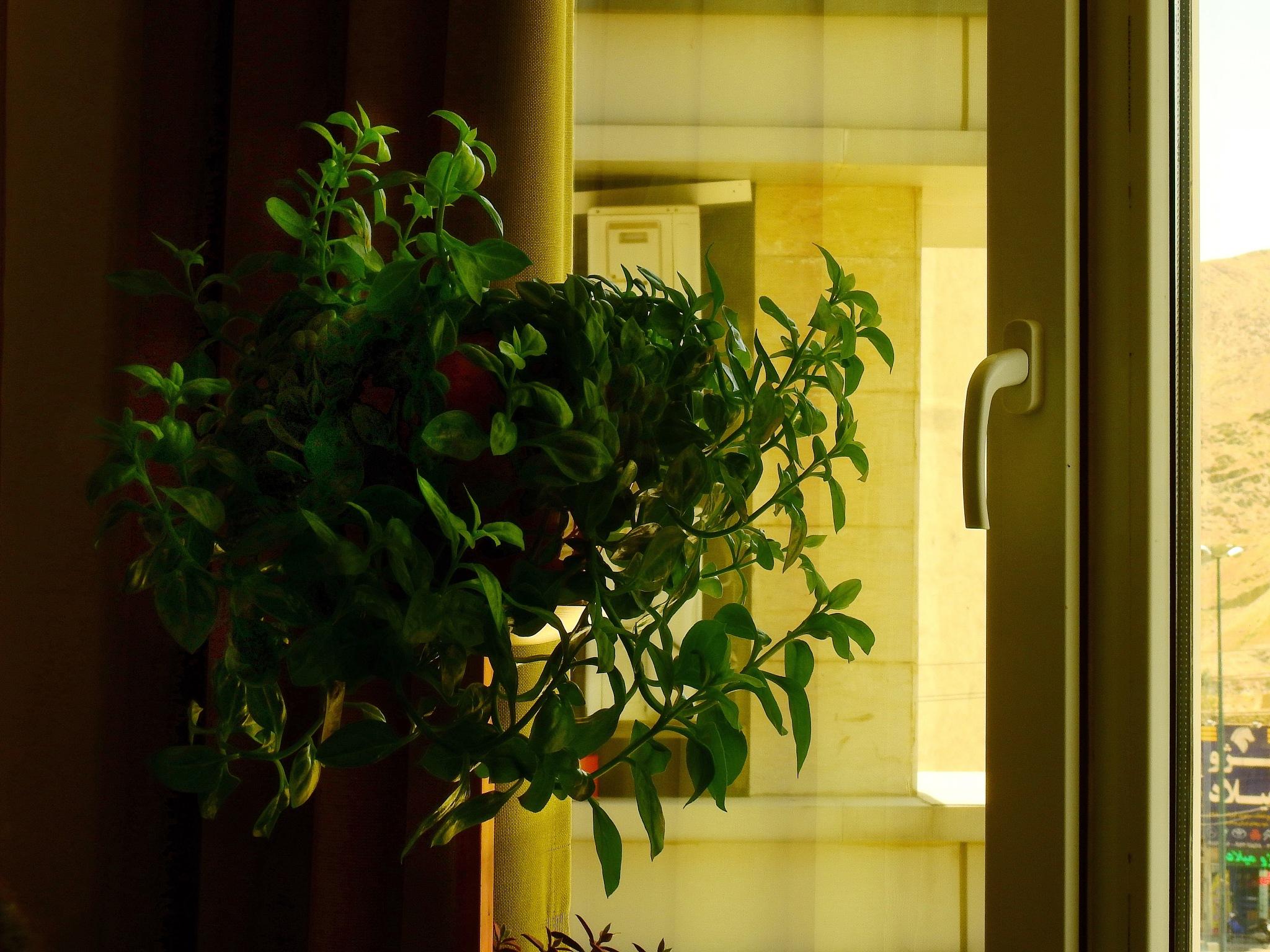 Home by Aahmad Hezavei