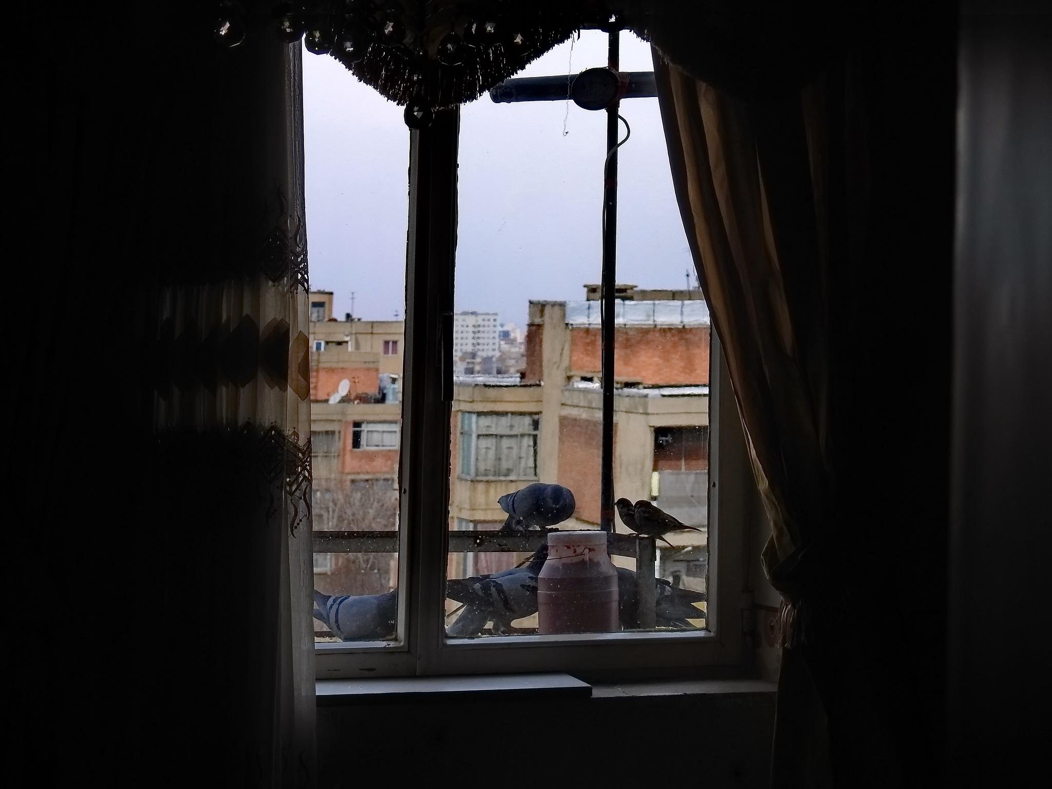 window by Aahmad Hezavei