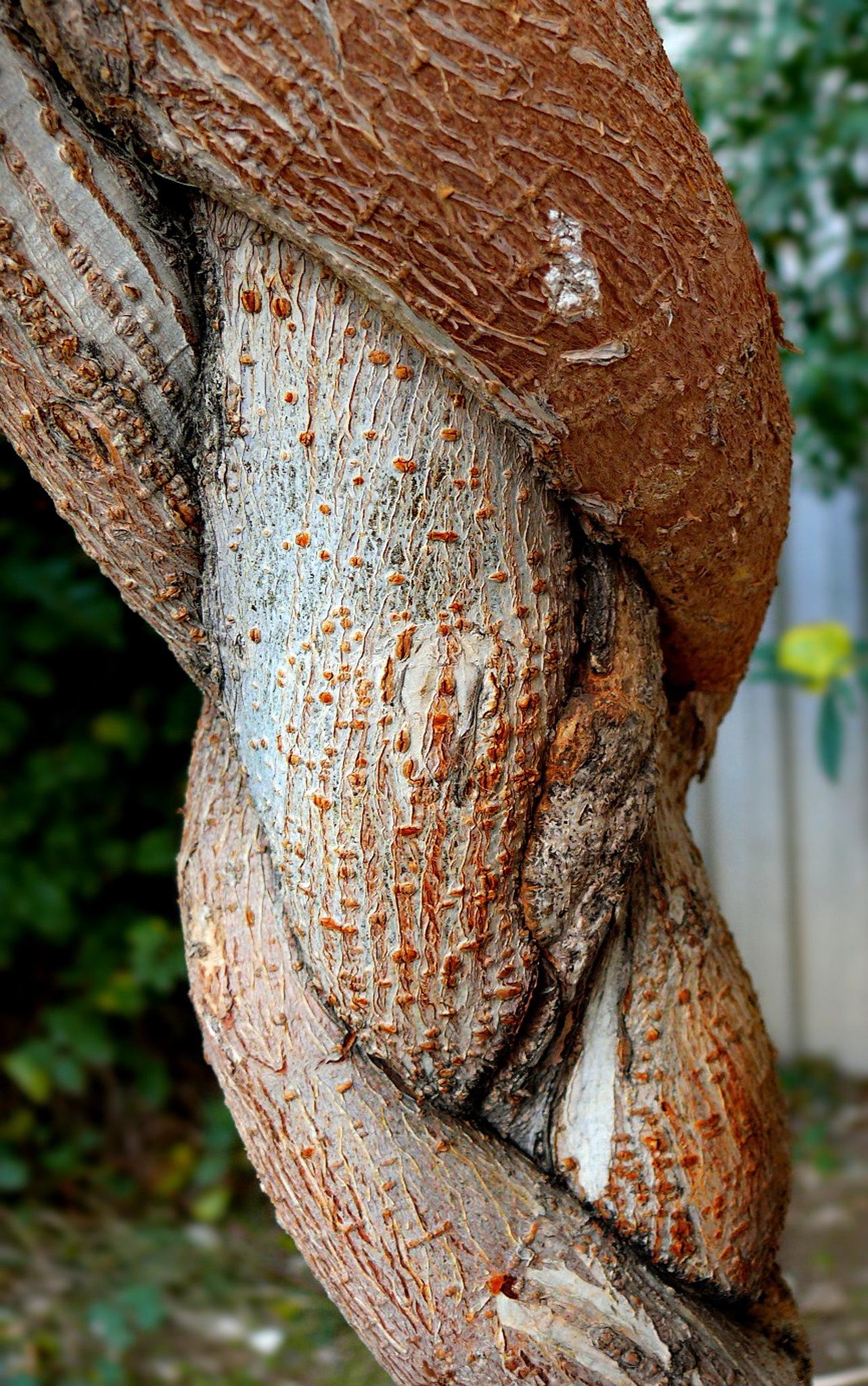 Tree,Nude Woman by Aahmad Hezavei