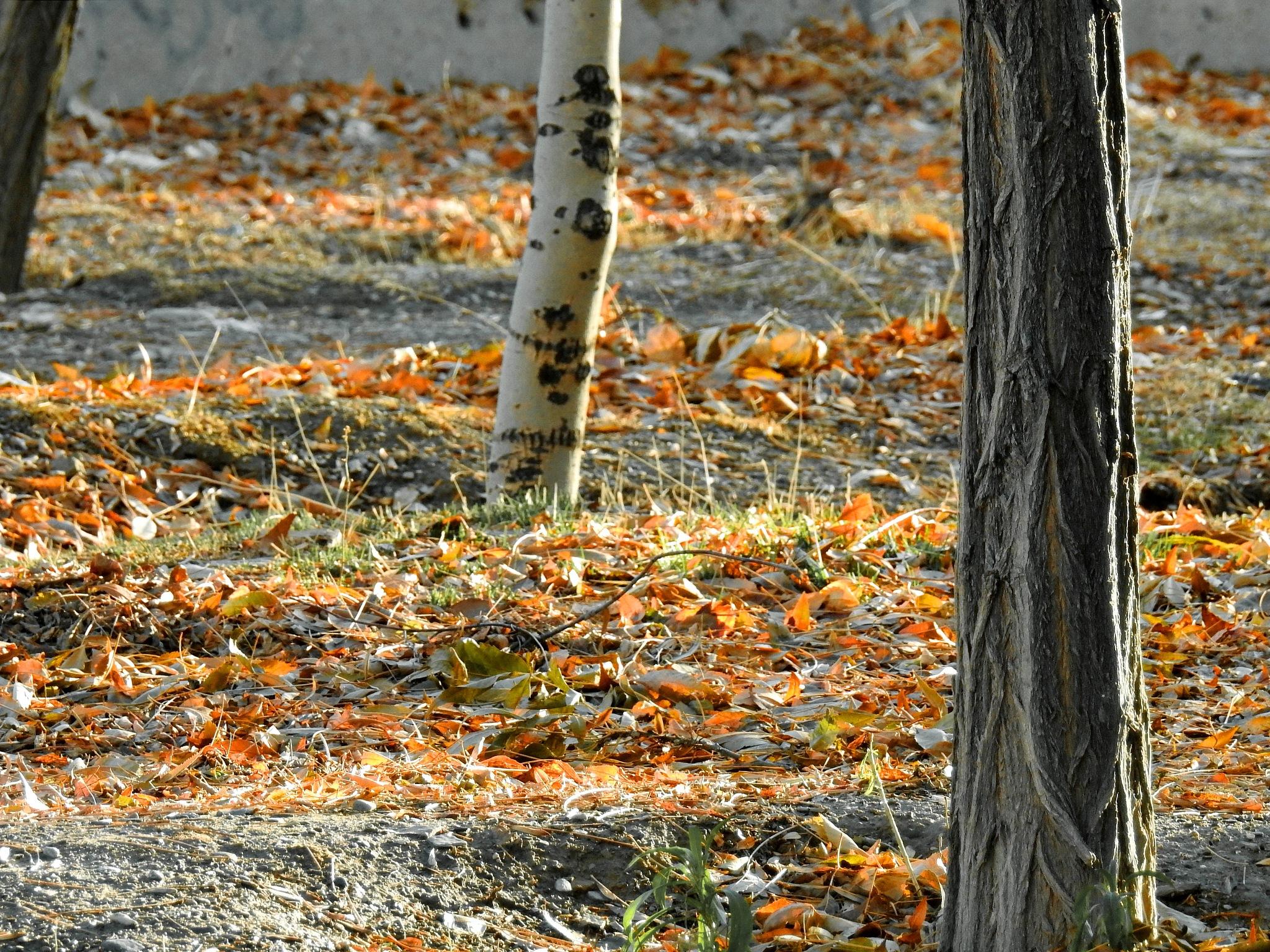 the autumn by Aahmad Hezavei